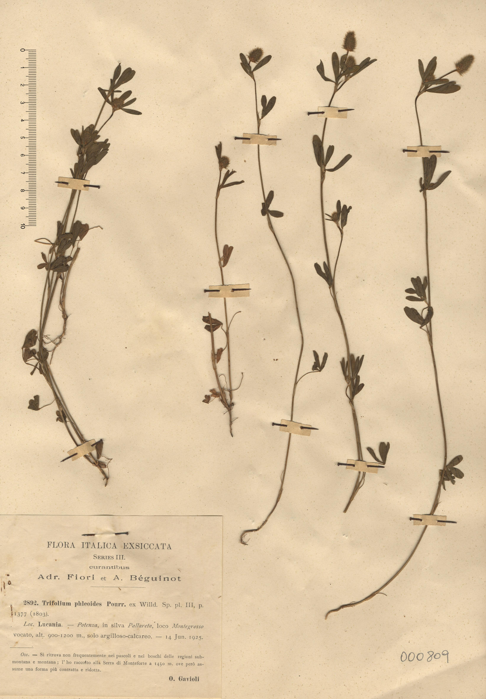 © Hortus Botanicus Catinensis - Herb. sheet  000809<br>