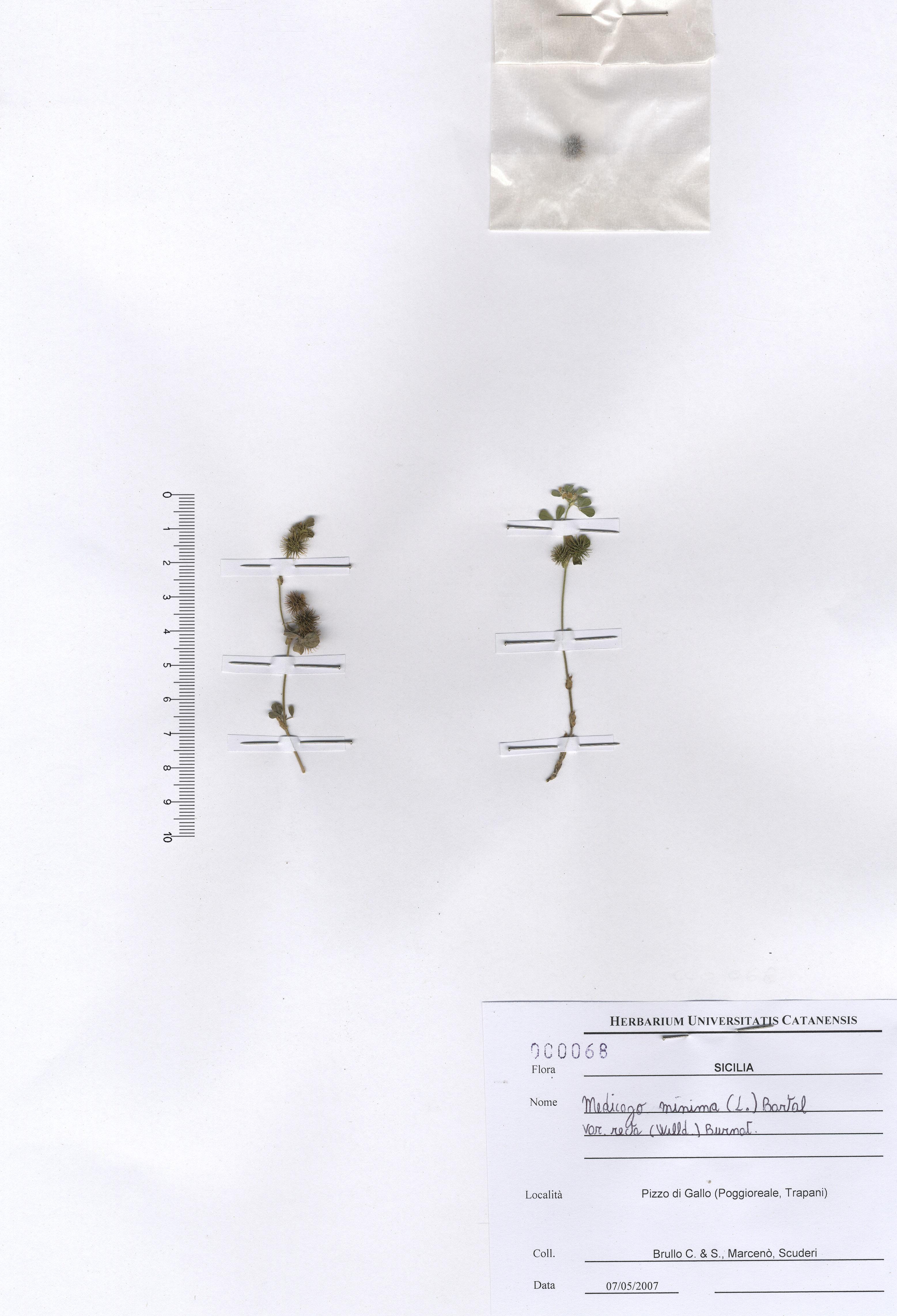 © Hortus Botanicus Catinensis - Herb. sheet 000068<br>