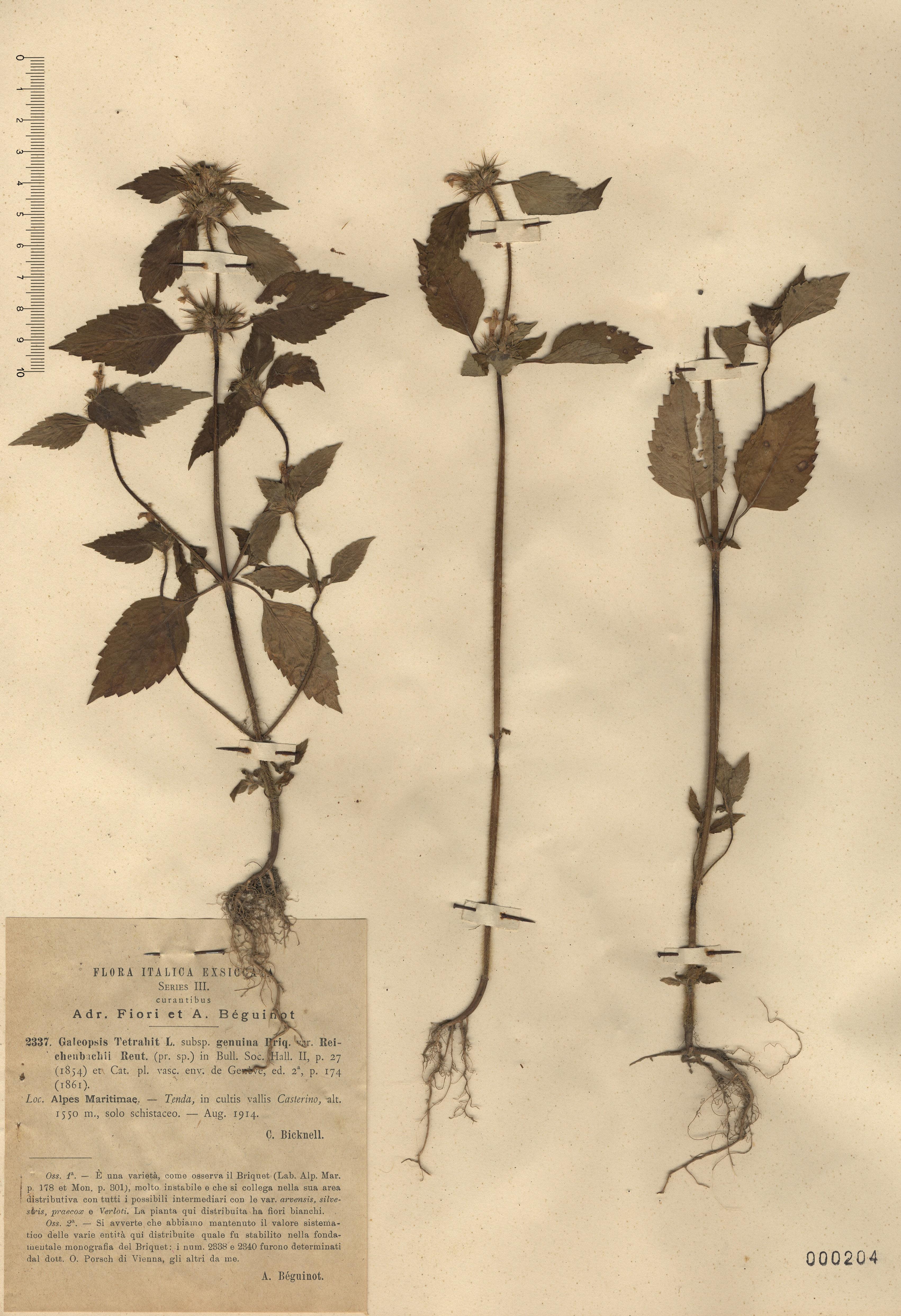 © Hortus Botanicus Catinensis - Herb. sheet 000204<br>