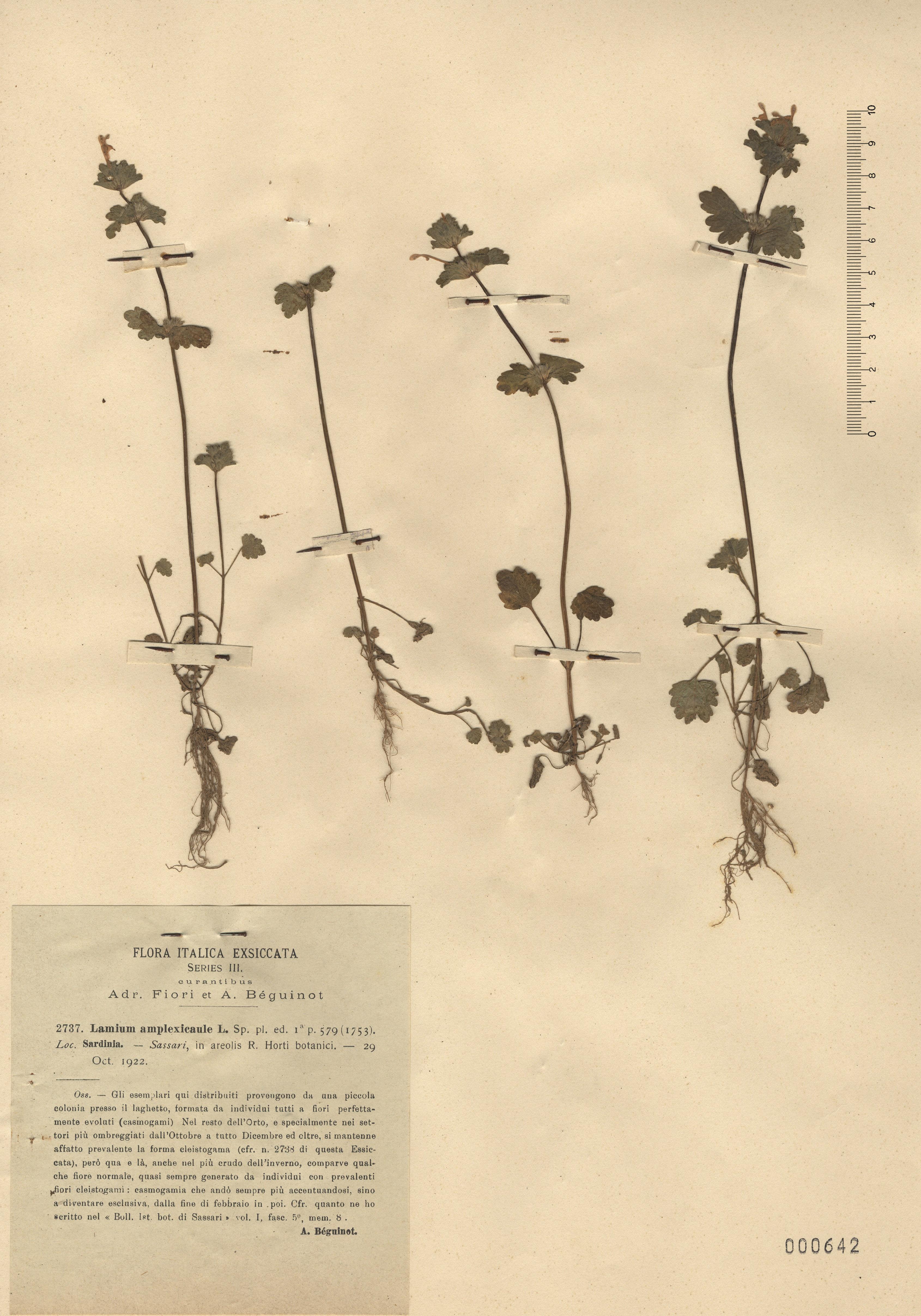 © Hortus Botanicus Catinensis - Herb. sheet 000642<br>