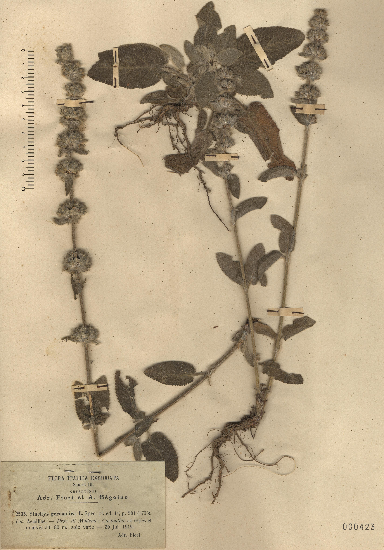© Hortus Botanicus Catinensis - Herb. sheet 000423<br>