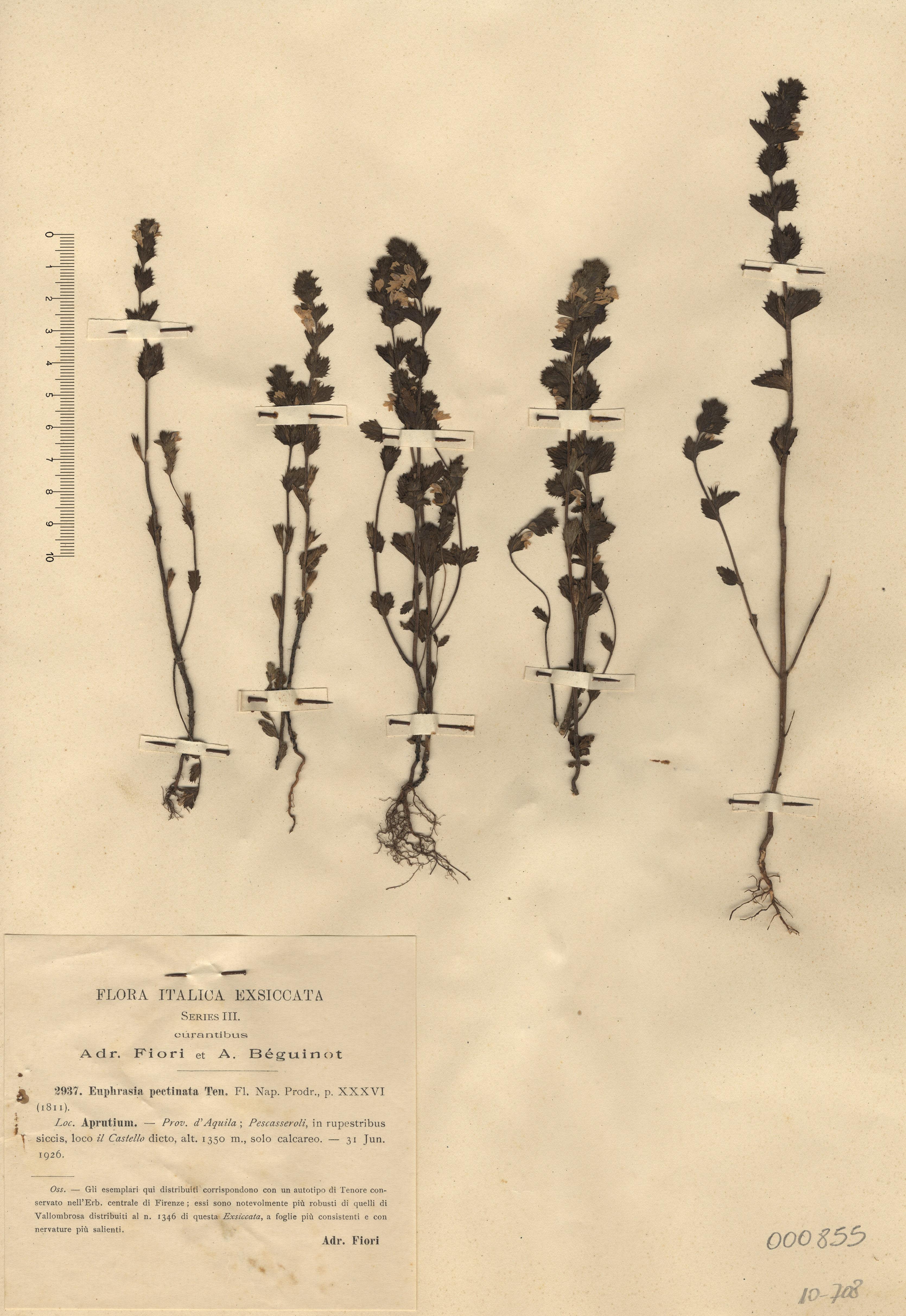 © Hortus Botanicus Catinensis - Herb. sheet 000855<br>
