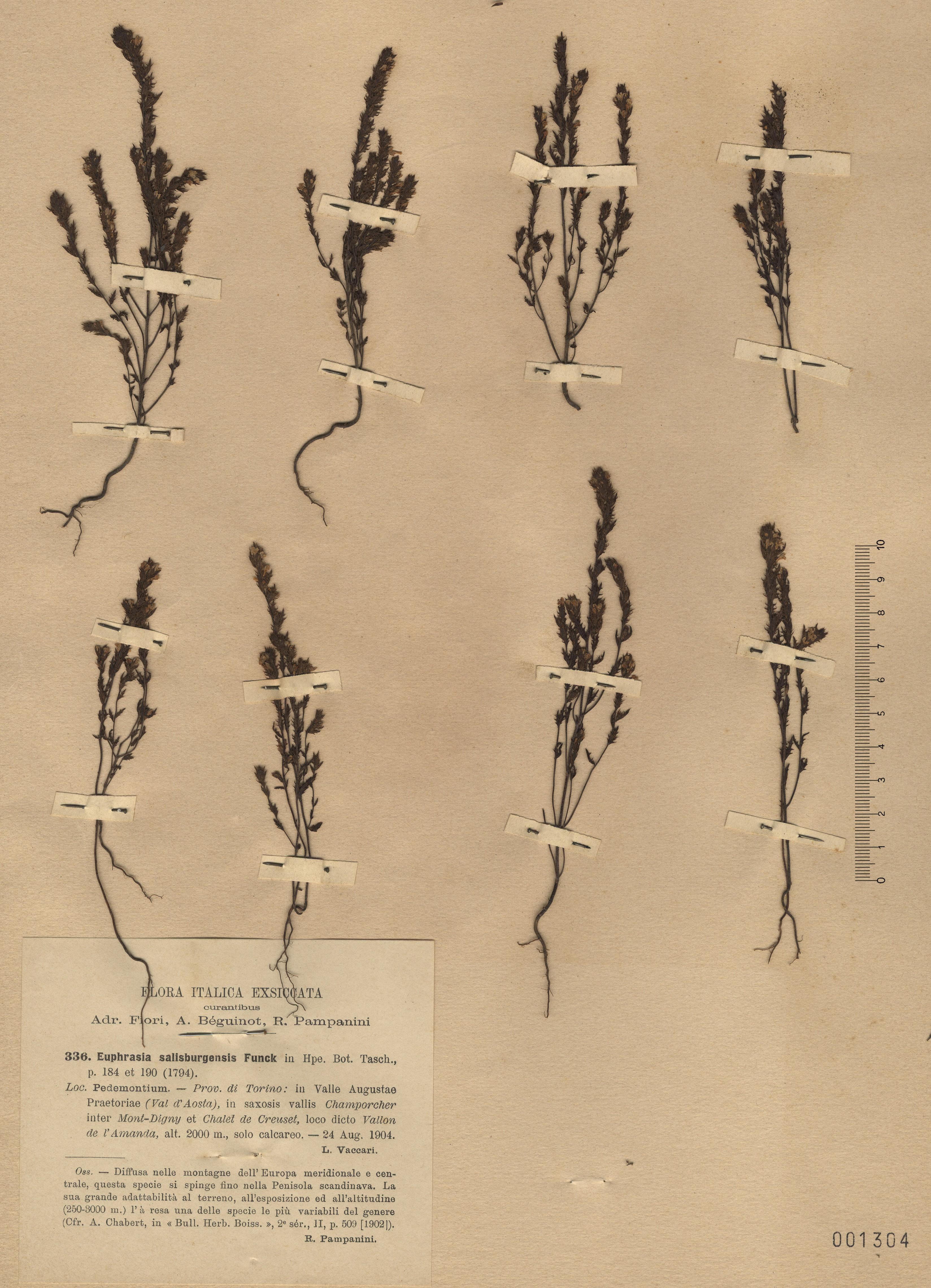 © Hortus Botanicus Catinensis - Herb. sheet 001304<br>