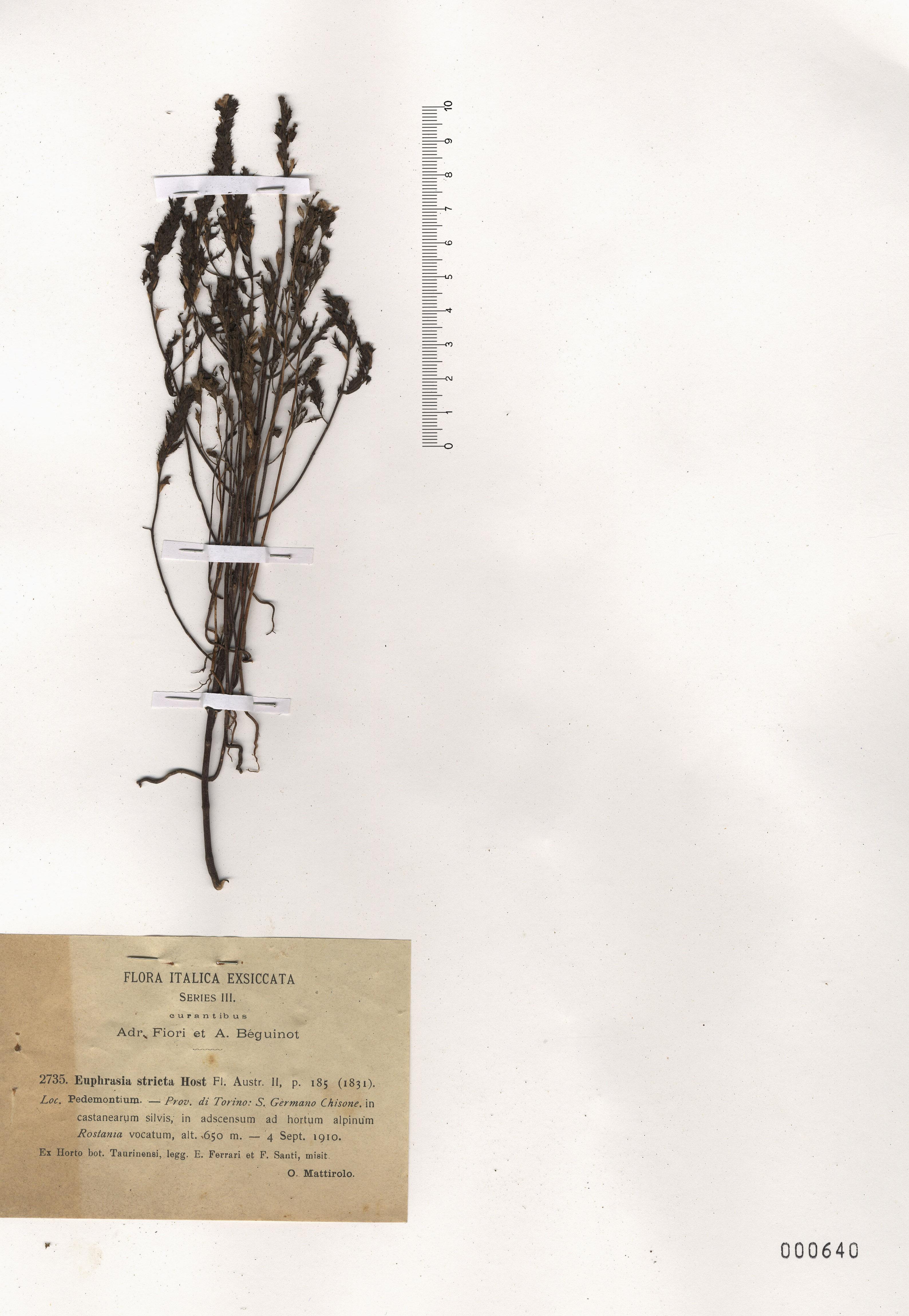 © Hortus Botanicus Catinensis - Herb. sheet 000640<br>