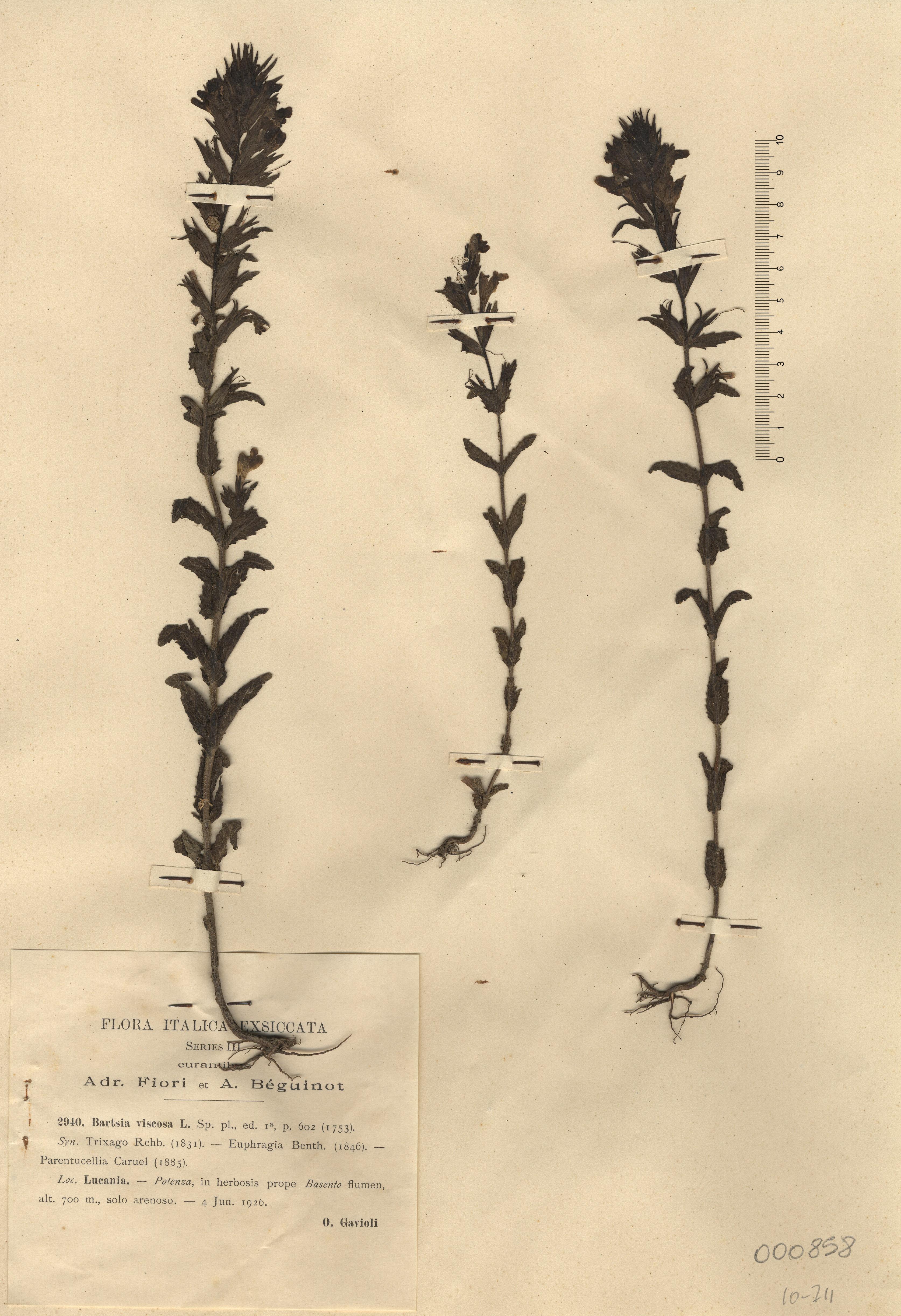 © Hortus Botanicus Catinensis - Herb. sheet 000858<br>