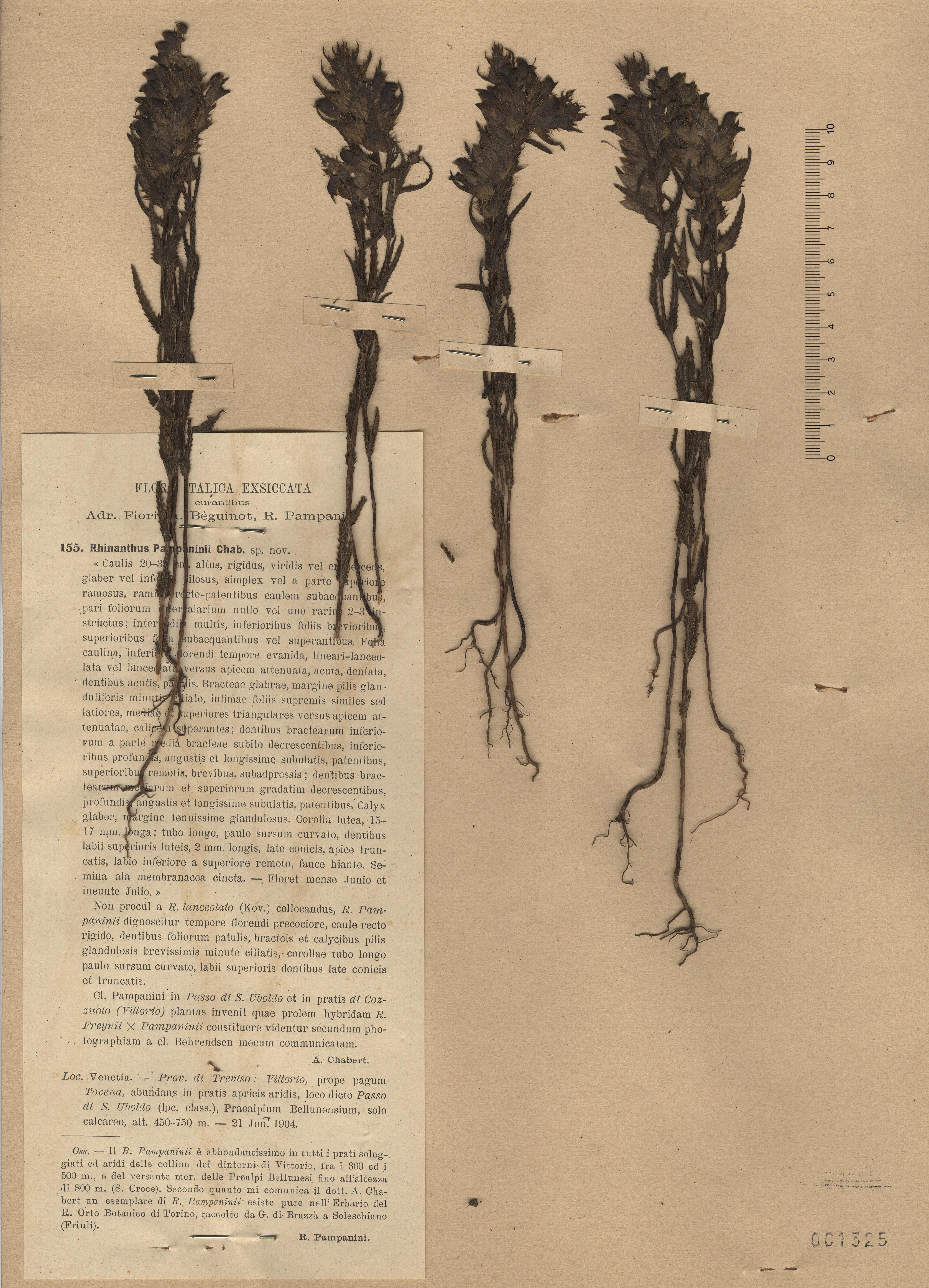 © Hortus Botanicus Catinensis - Herb. sheet 001325<br>