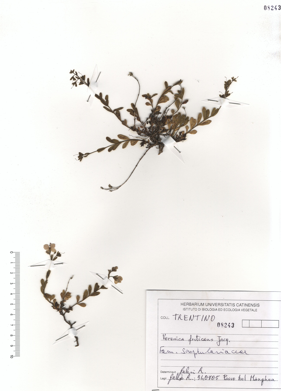 © Hortus  Botanicus Catinensis - Herb. sheet 108243<br>