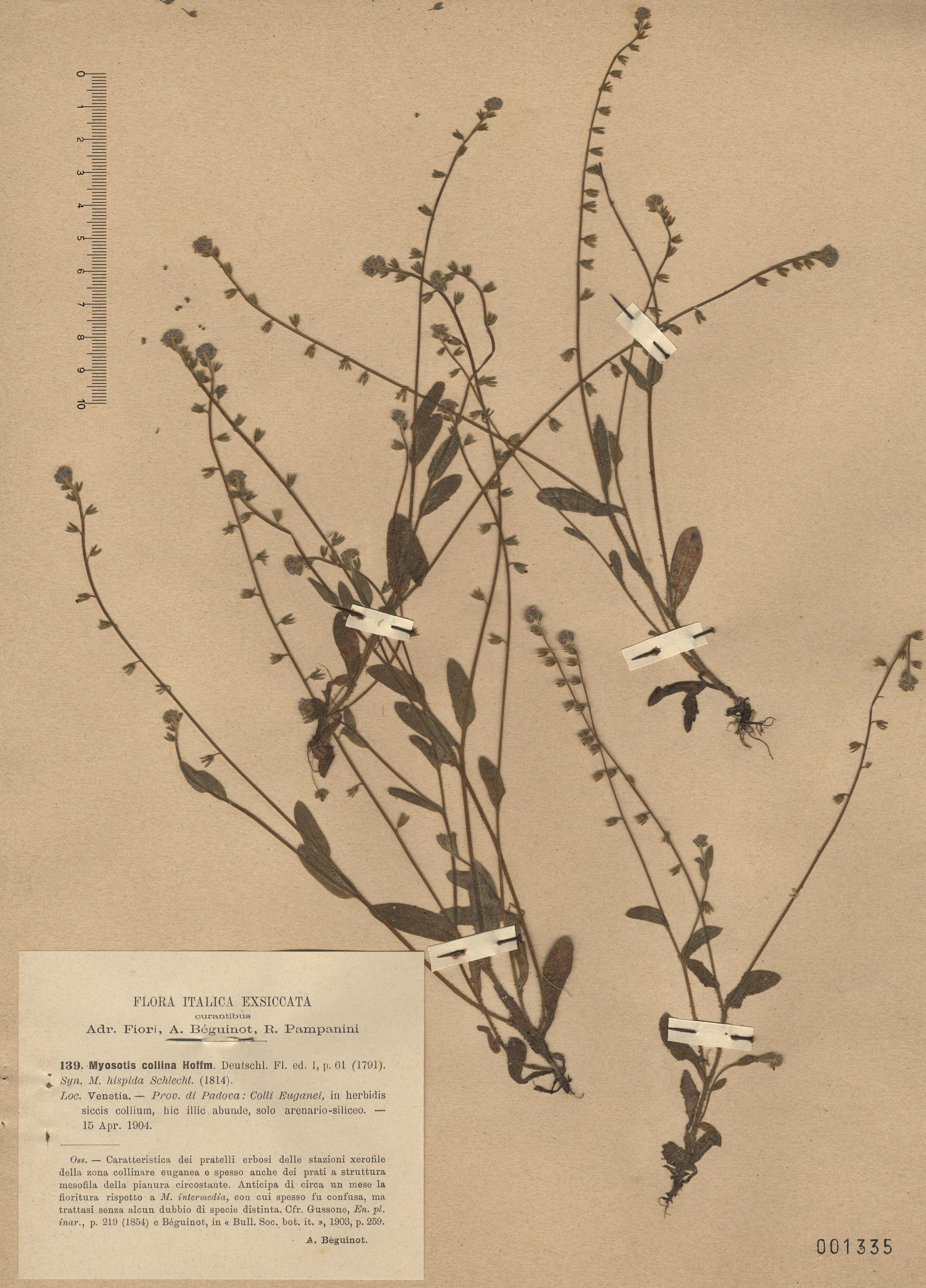 © Hortus Botanicus Catinensis - Herb. sheet 001335<br>