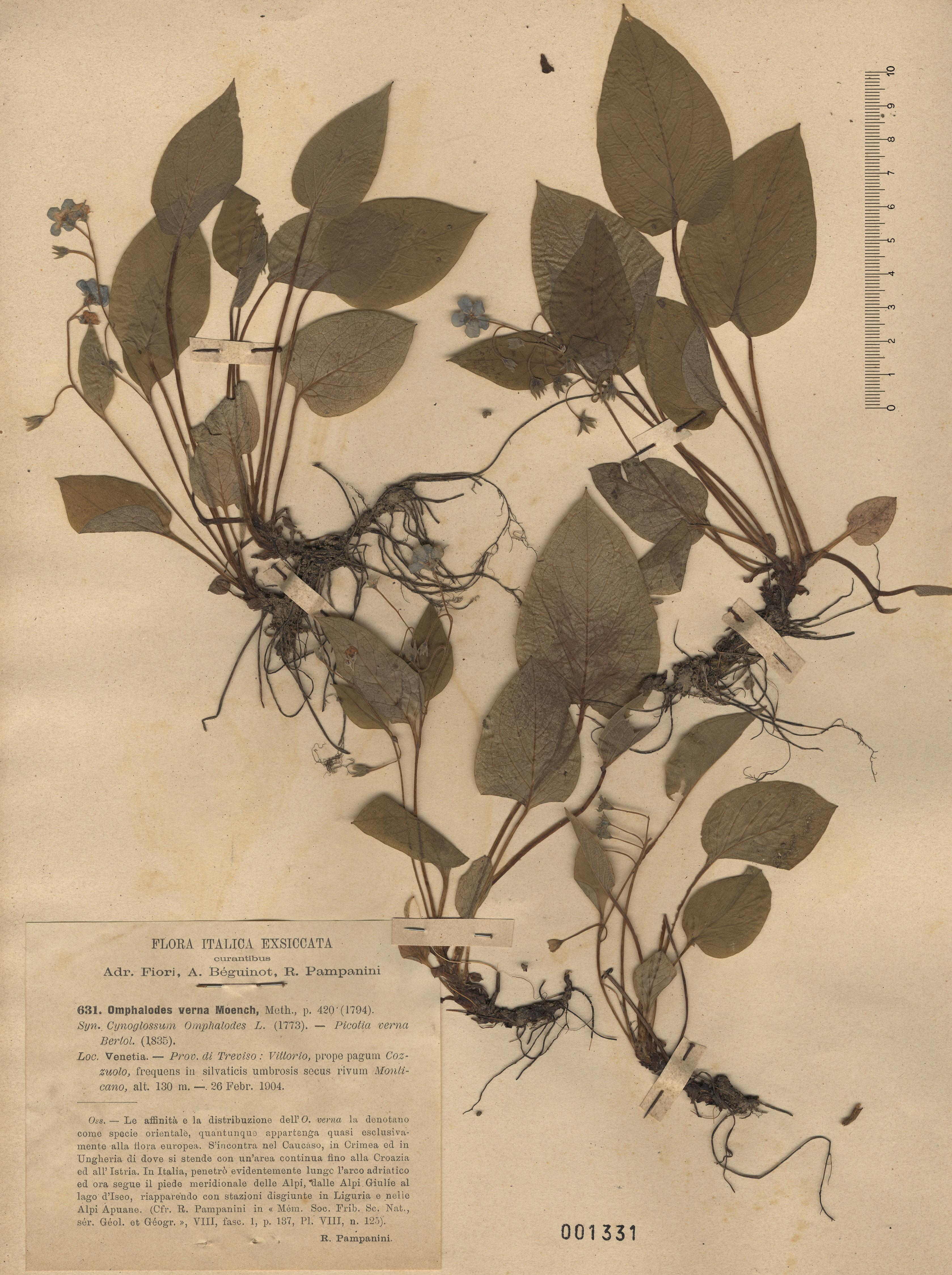 © Hortus Botanicus Catinensis - Herb. sheet 001331<br>