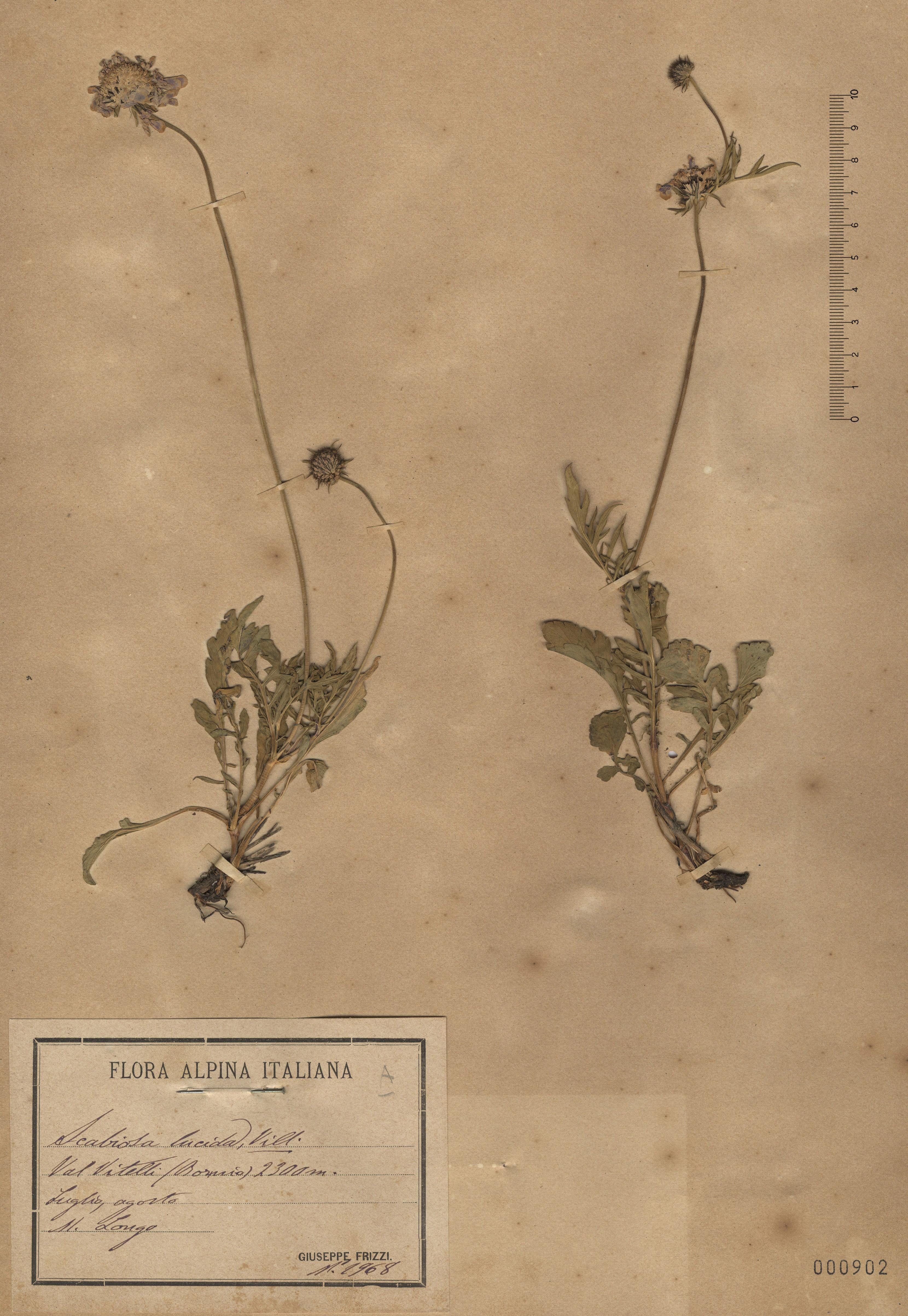© Hortus Botanicus Catinensis - Herb. sheet 000902<br>