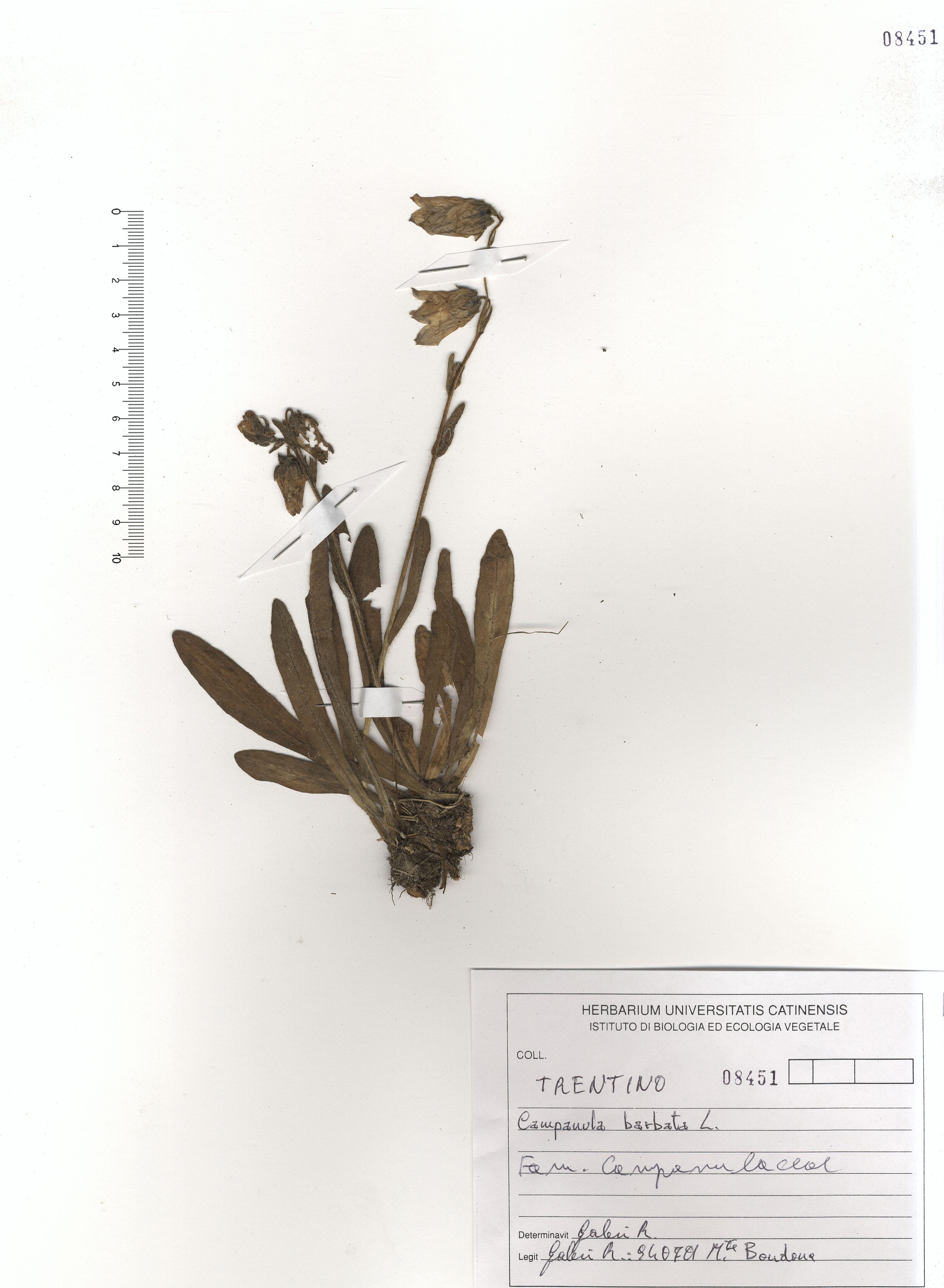 © Hortus Botanicus Catinensis - Herb. sheet 108451<br>