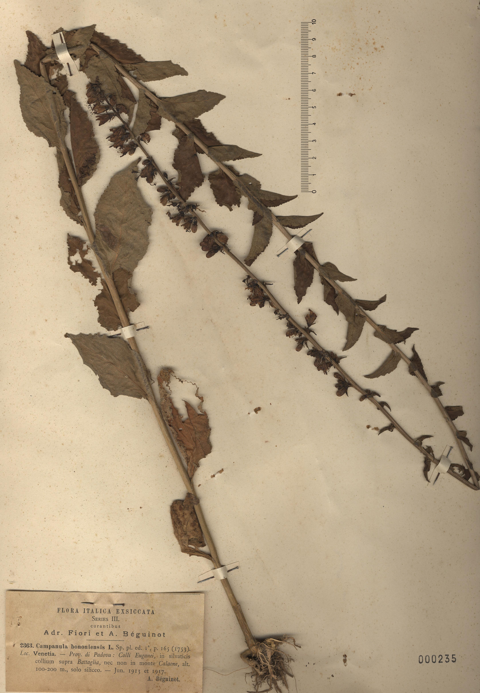 © Hortus Botanicus Catinensis - Herb. sheet 000235<br>