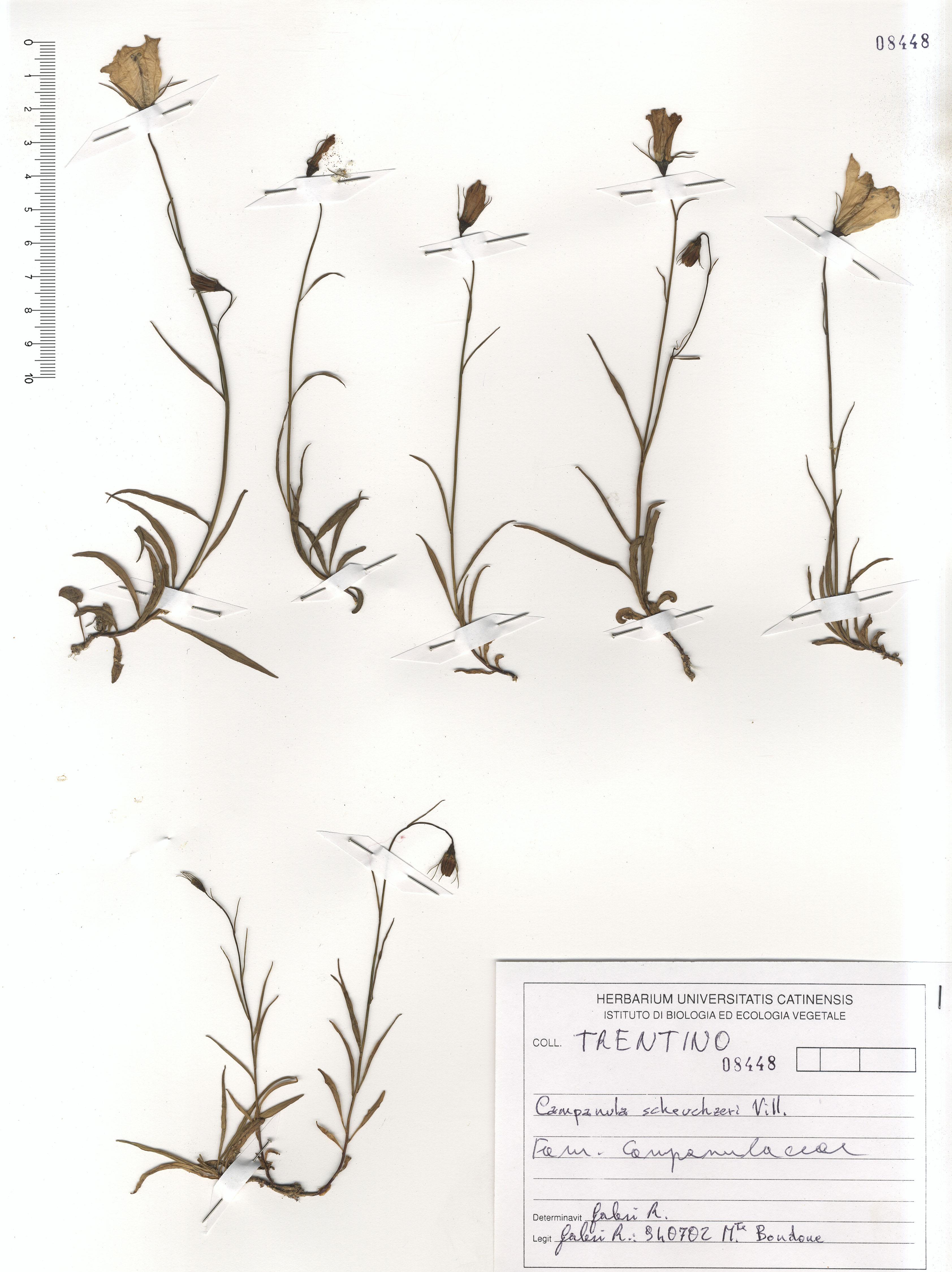 © Hortus Botanicus Catinensis - Herb. sheet 108448<br>