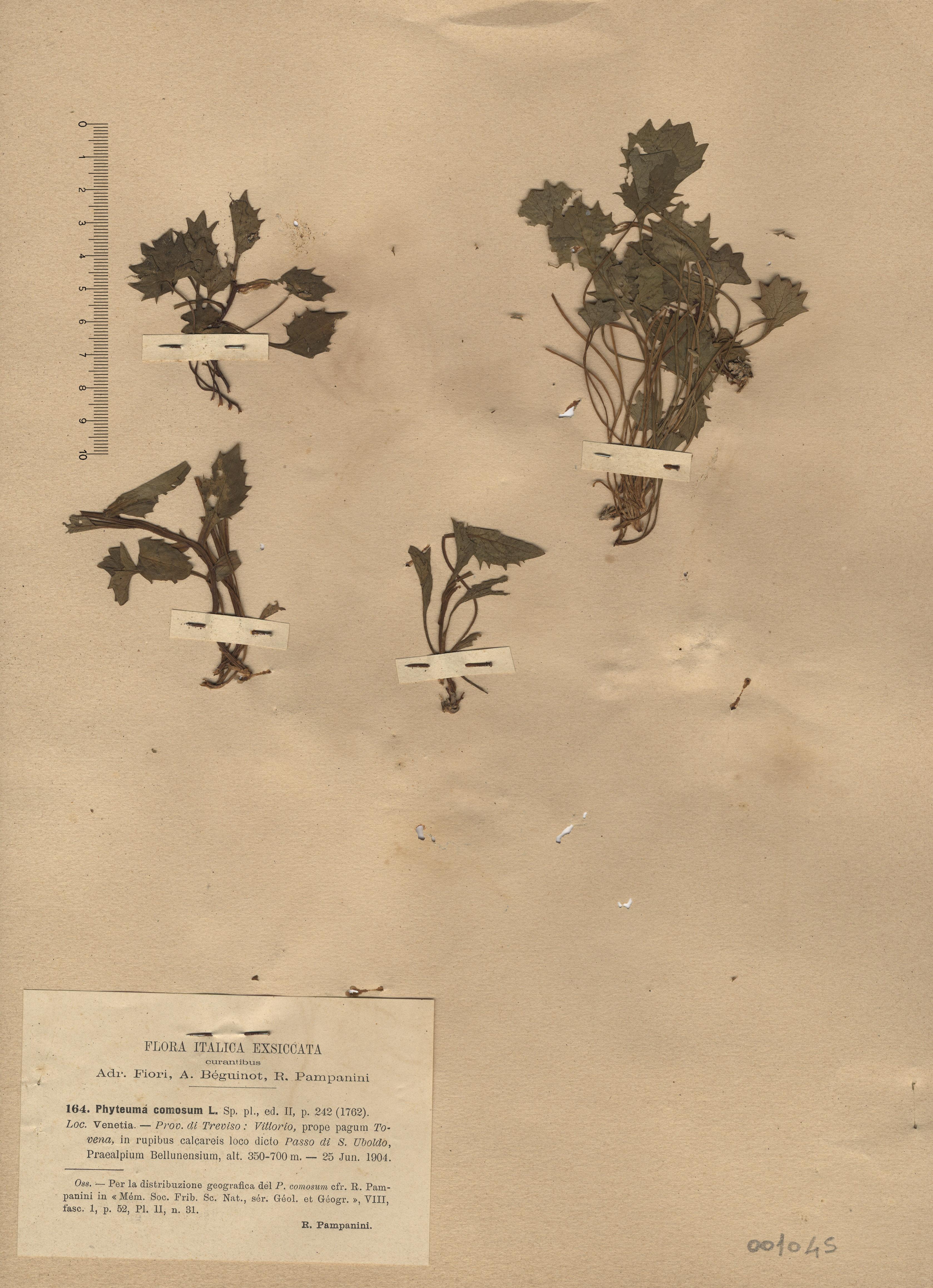 © Hortus Botanicus Catinensis - Herb. sheet 001045<br>
