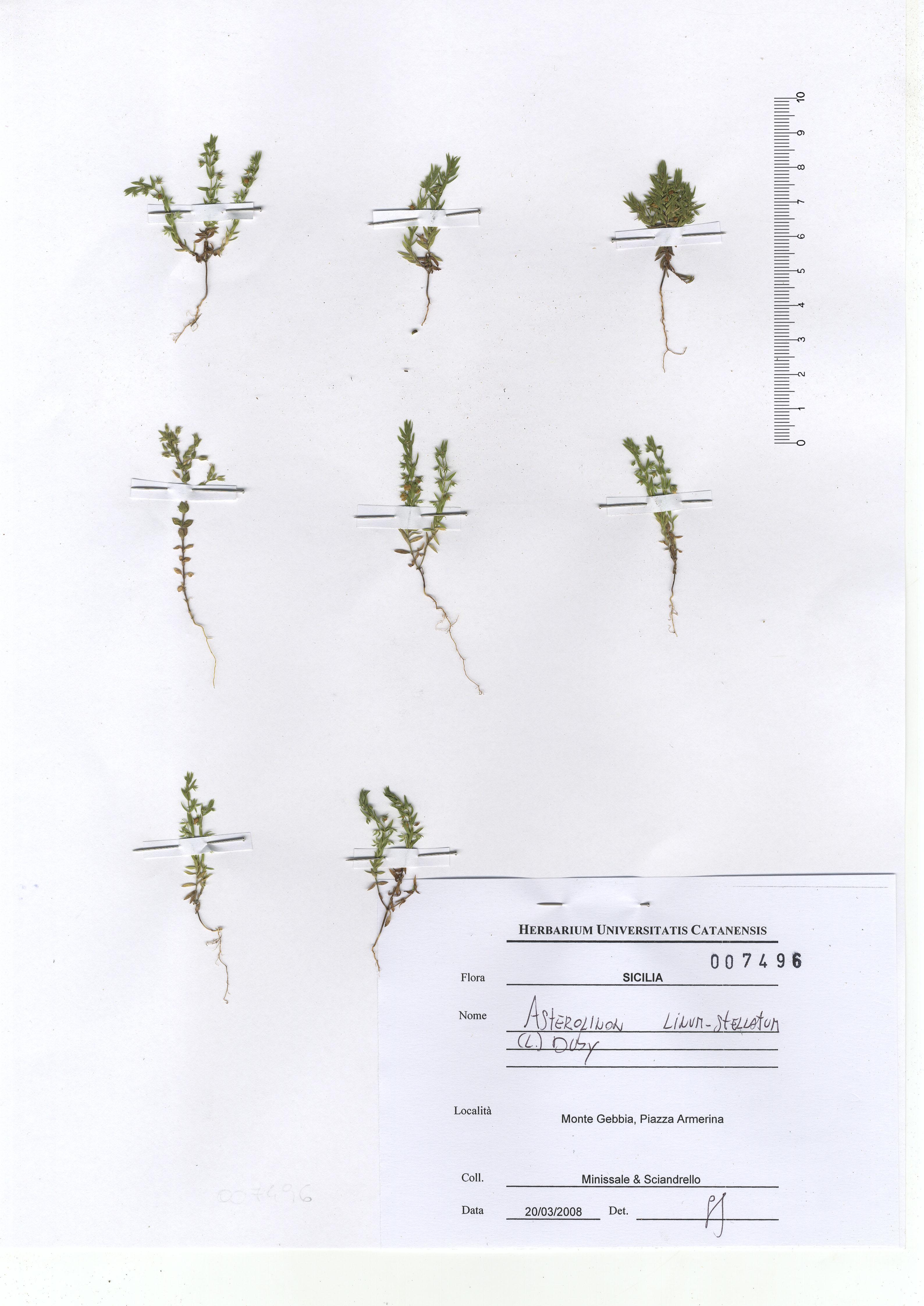© Hortus Botanicus Catinensis - Herb. sheet 007496<br>