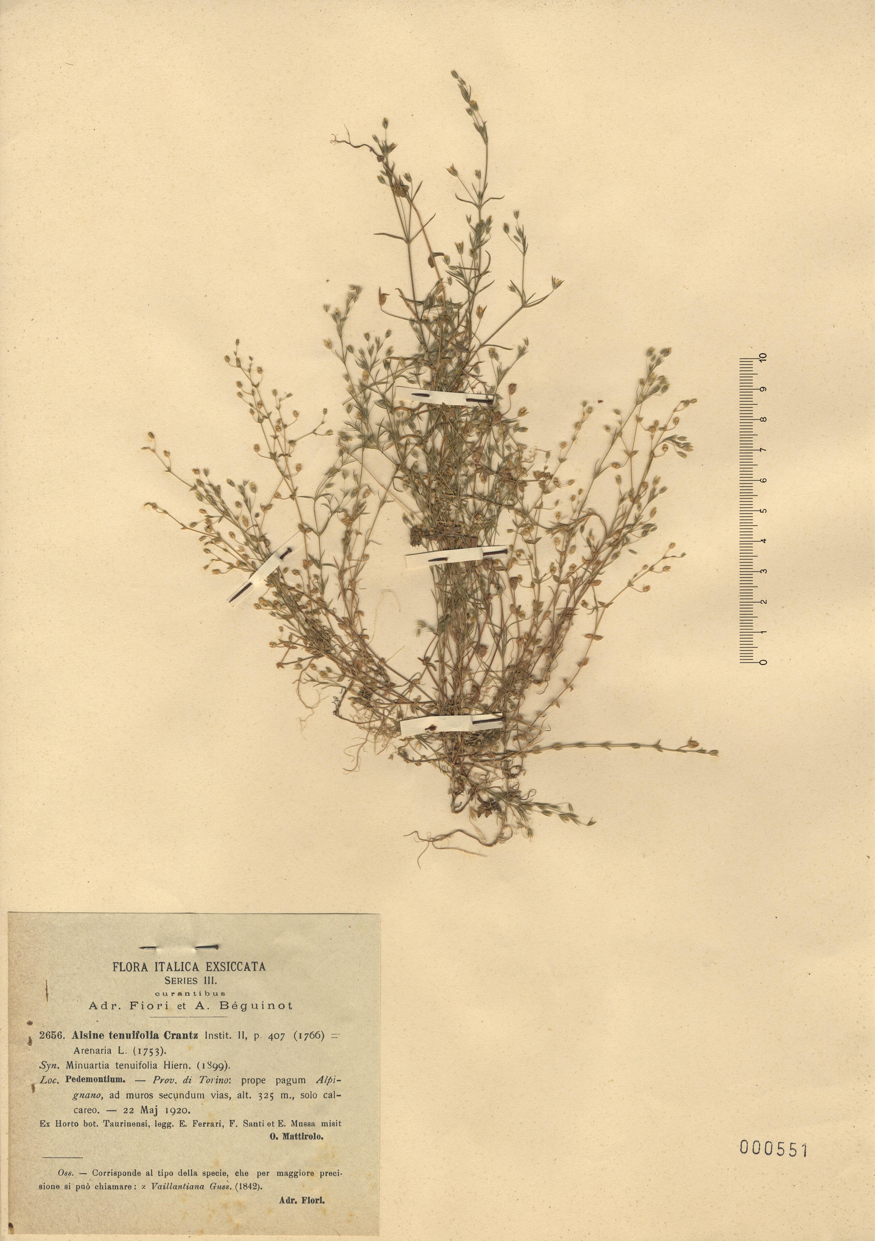 © Hortus Botanicus Catinensis - Herb. sheet 001551<br>