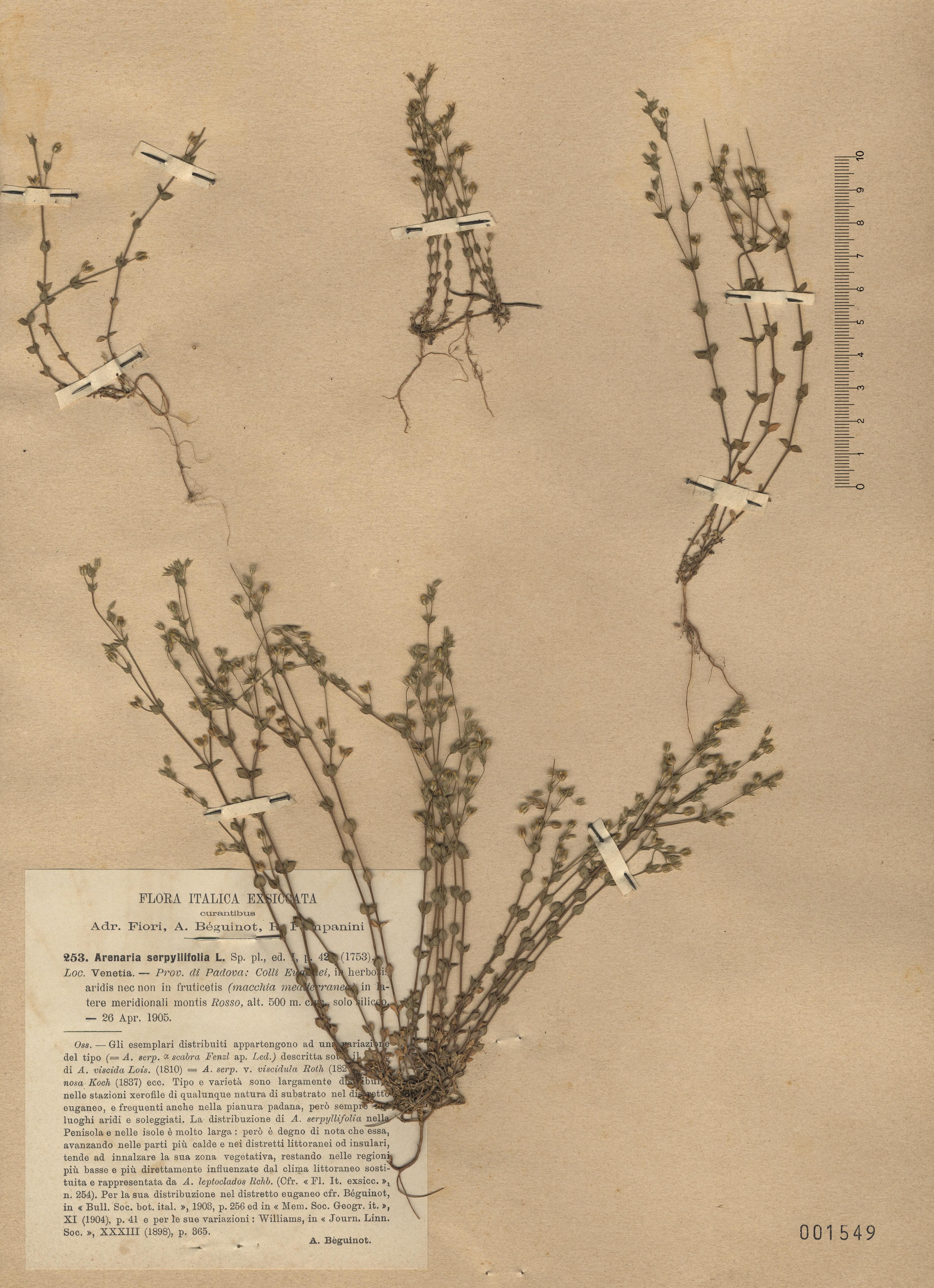 © Hortus Botanicus Catinensis - Herb. sheet 001549<br>