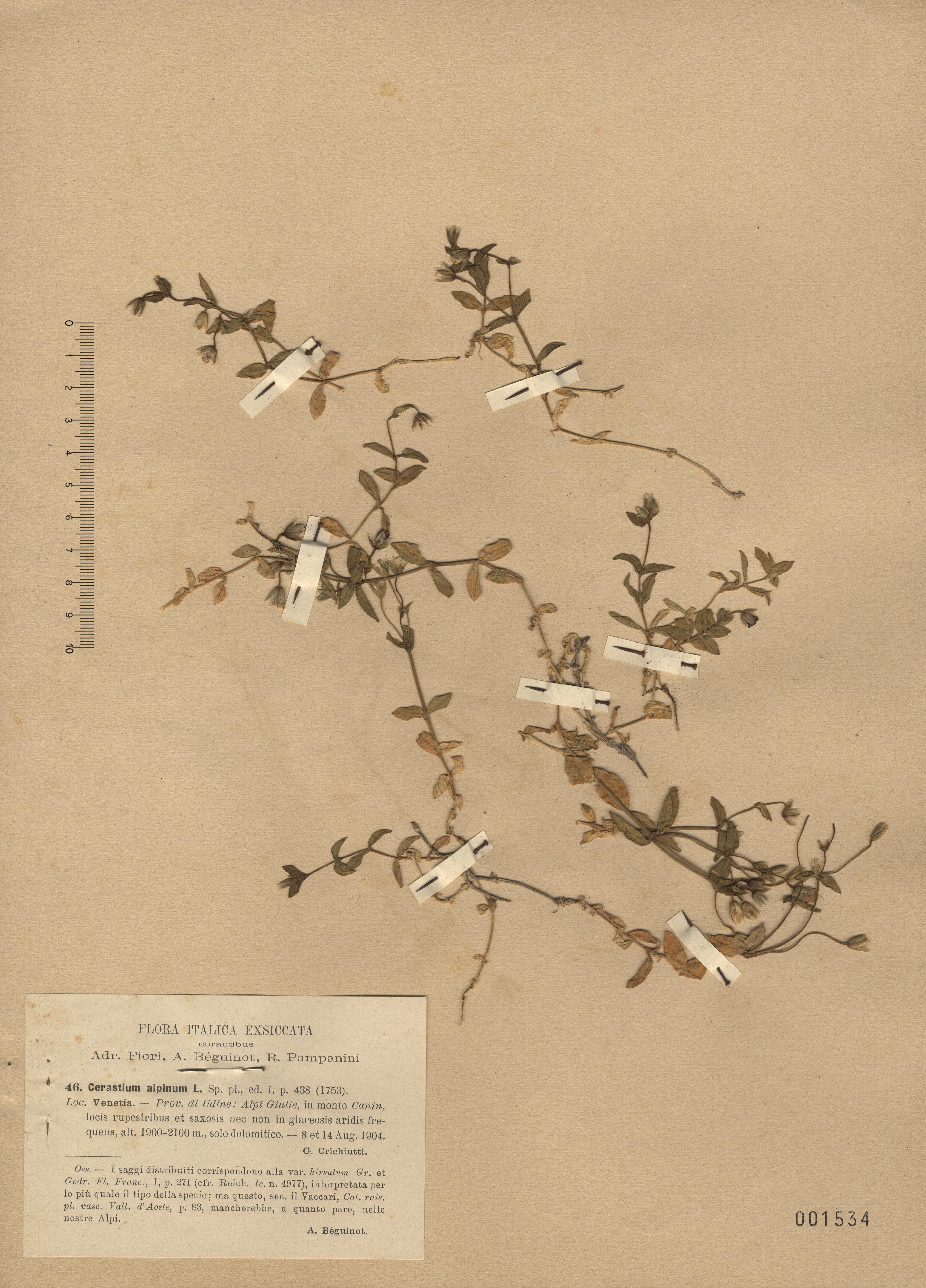 © Hortus Botanicus Catinensis - Herb. sheet 001534<br>