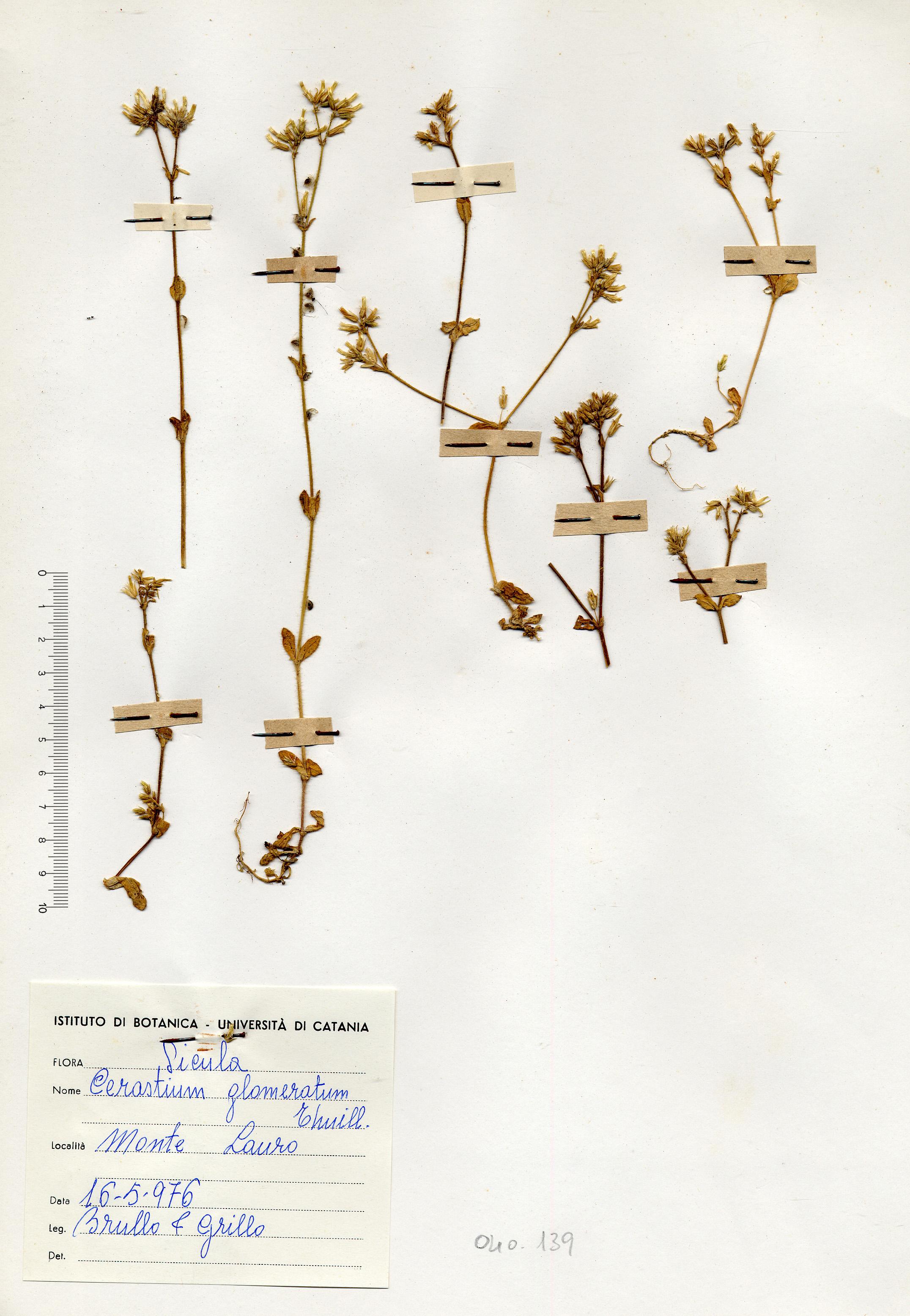 © Hortus Botanicus Catinensis - Herb. sheet 040139<br>