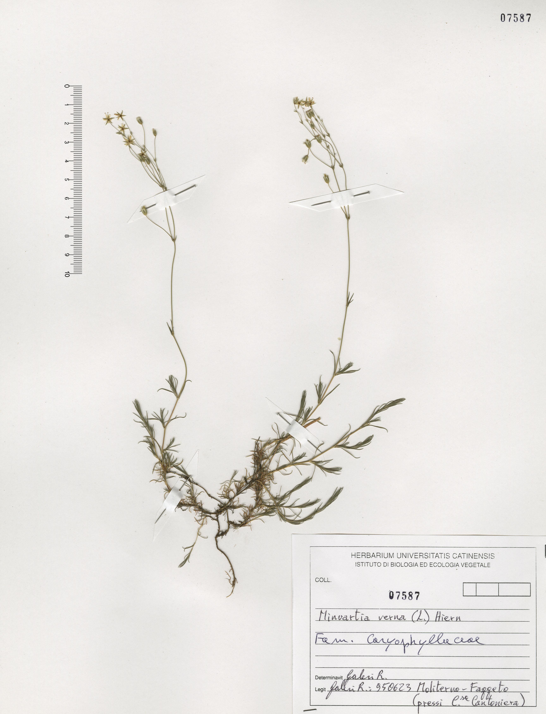 © Hortus Botanicus Catinensis - Herb. sheet 107587<br>