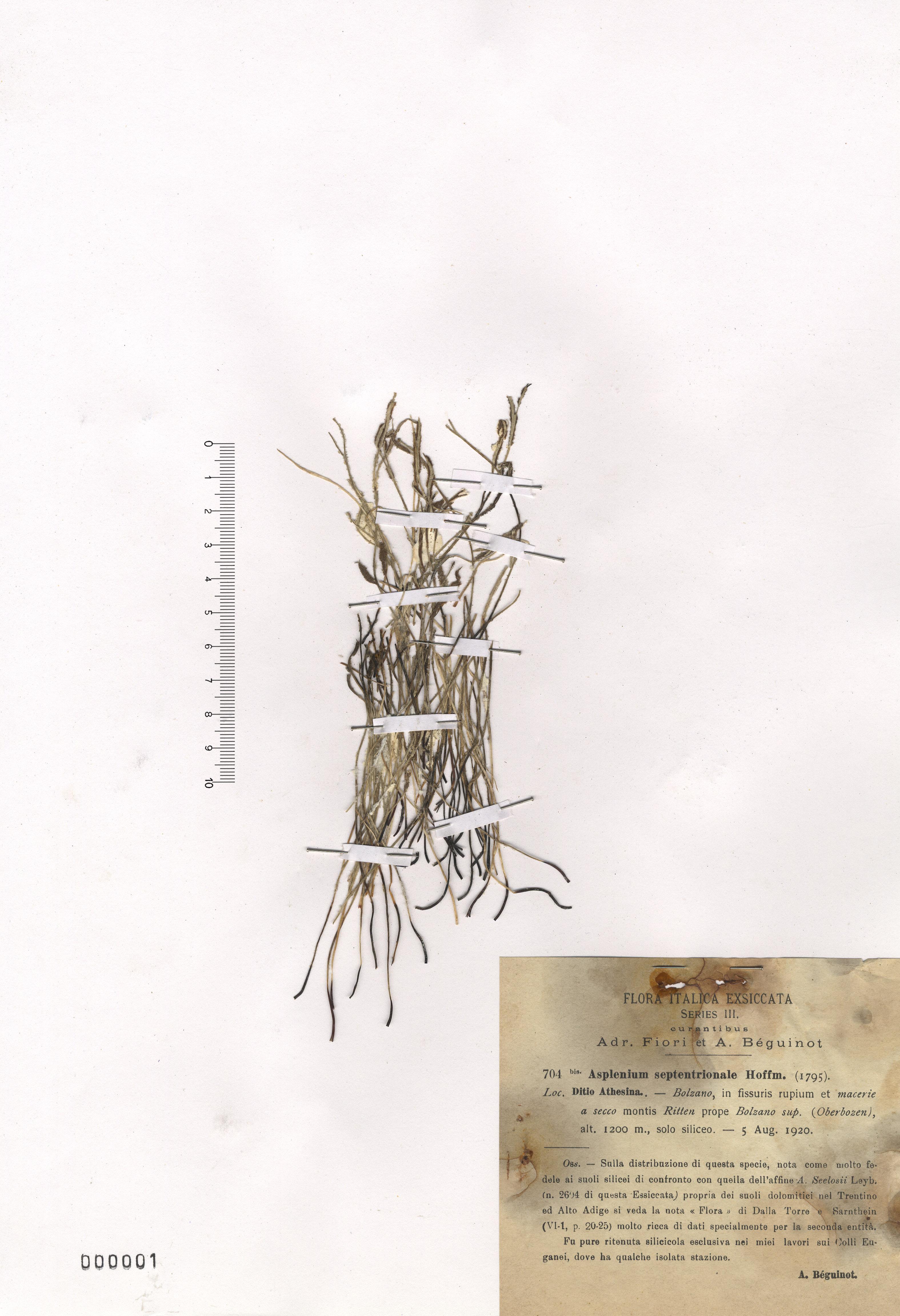 © Hortus Botanicus Catinensis - Herb. sheet 000001<br>