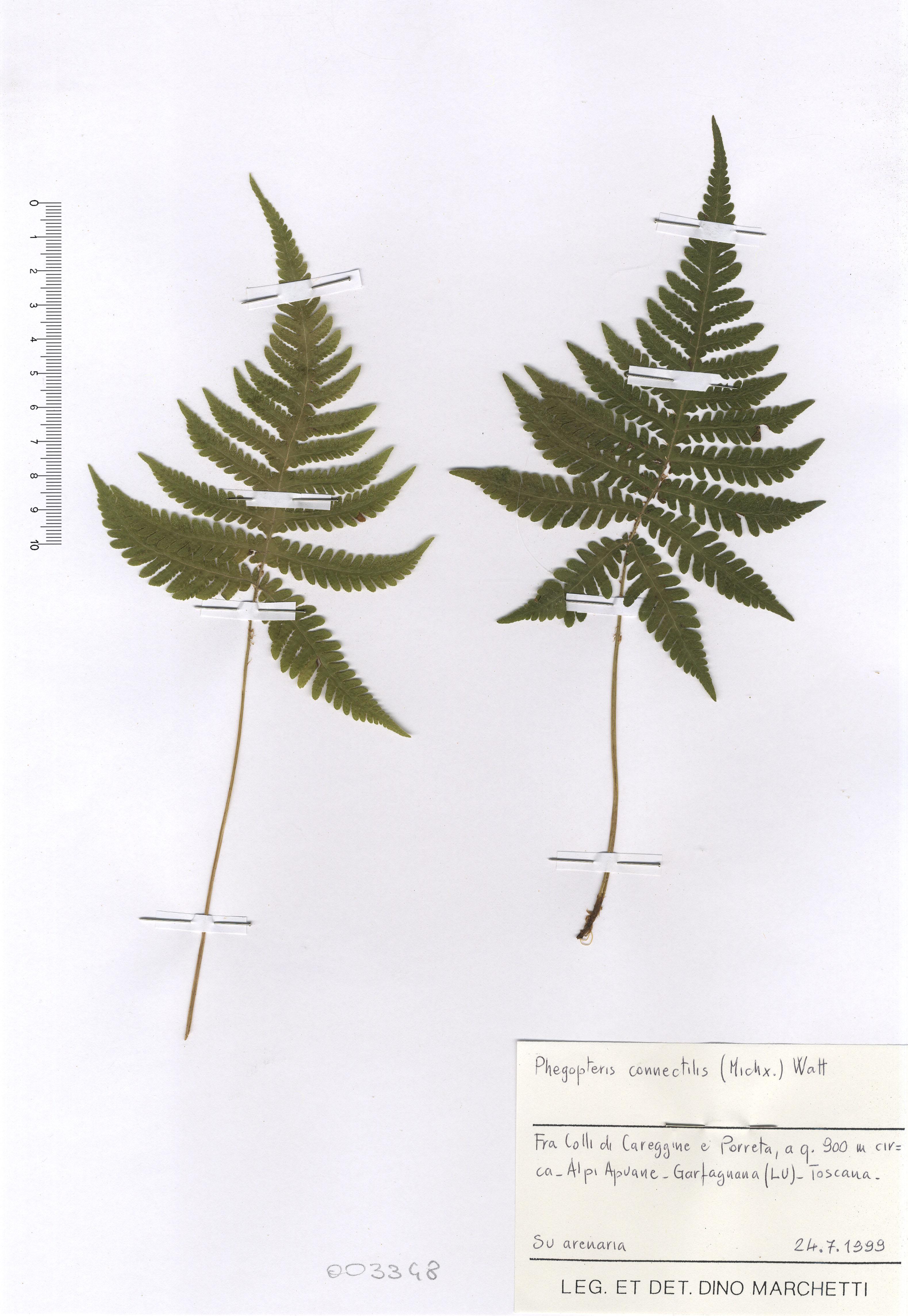 © Hortus Botanicus Catinensis - Herb. sheet 003348<br>