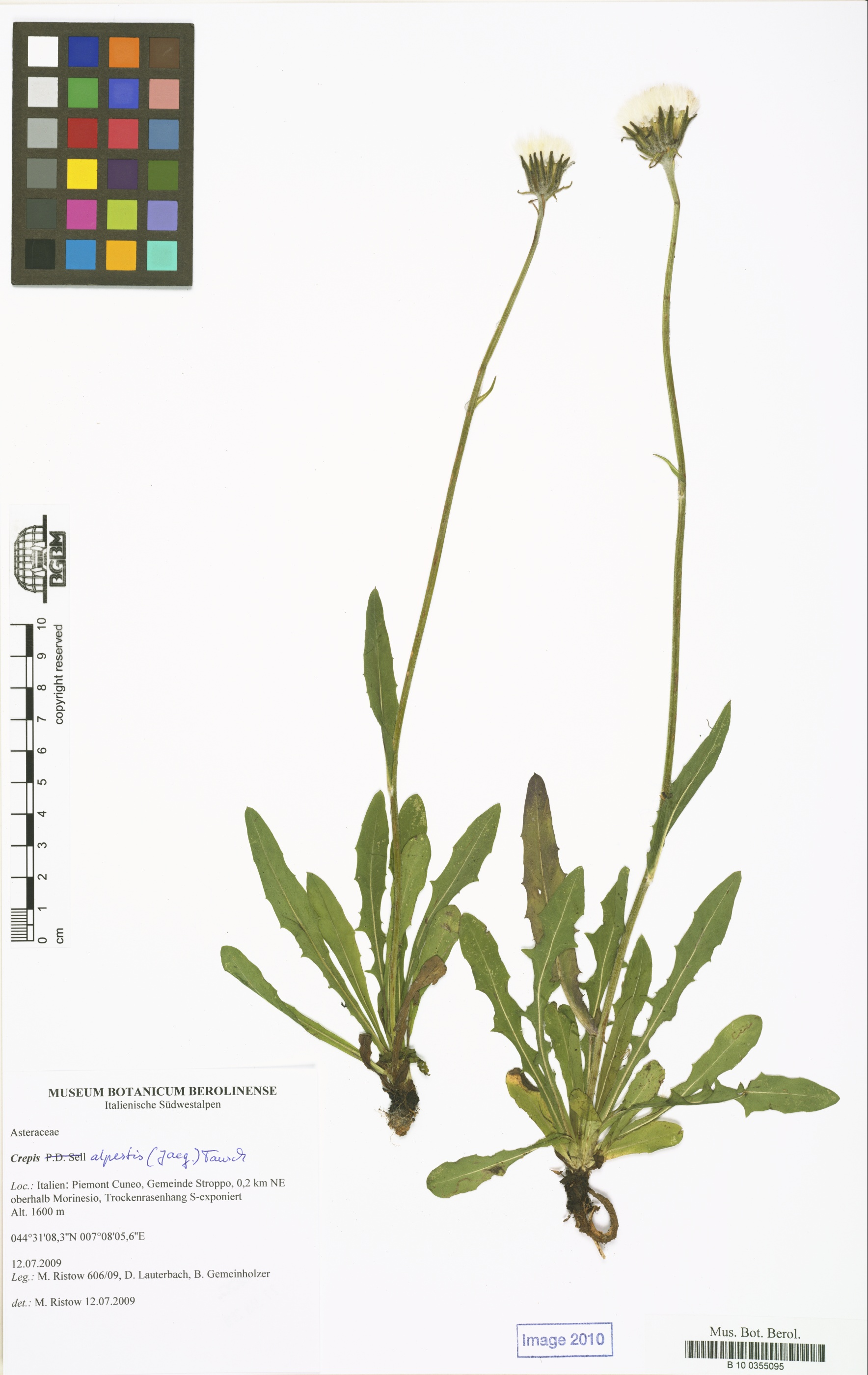 © Röpert, D. (Ed.) 2000- (continuously updated): Digital specimen images at the Herbarium Berolinense. - Published on the Internet http://ww2.bgbm.org/herbarium/ (Barcode: B 10 0355095 / ImageId: 315912) [accessed 20-Nov-11].<br>