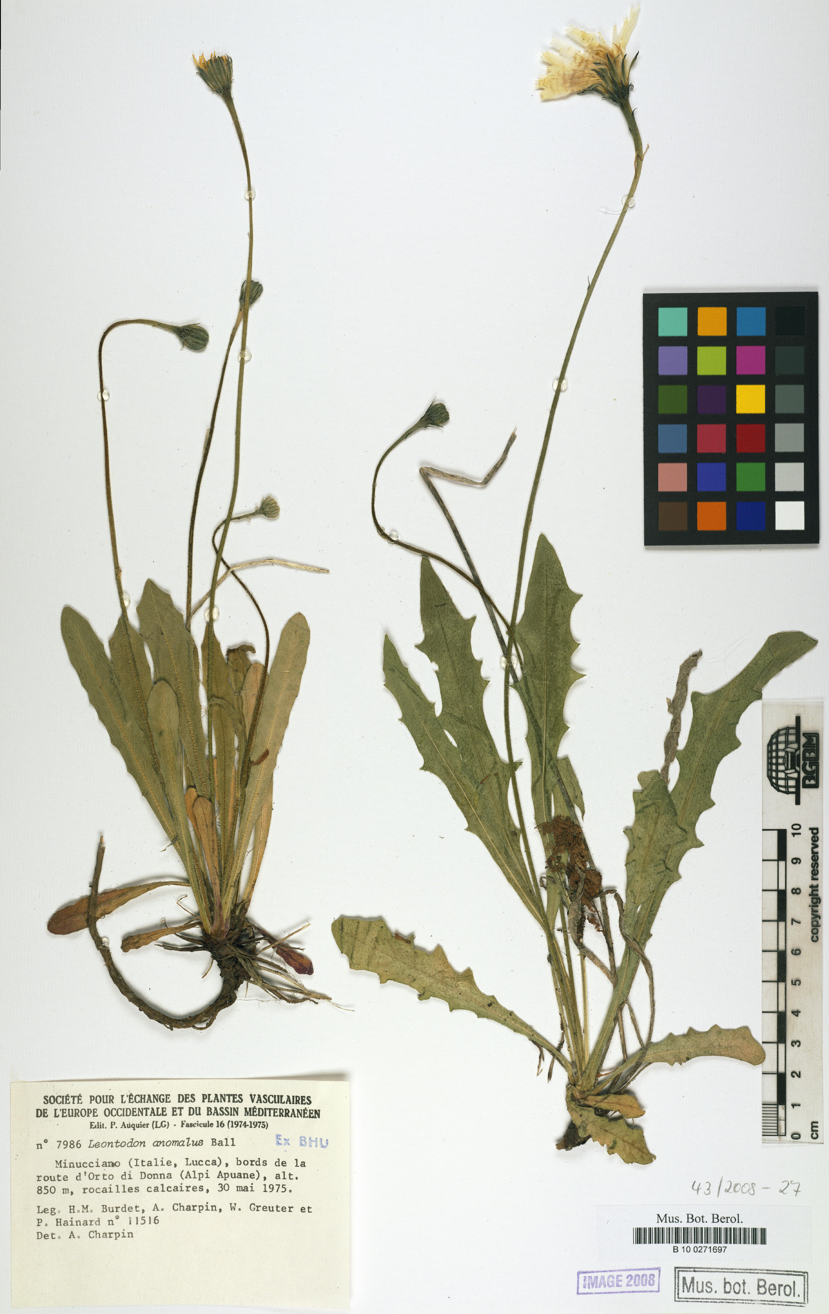 © Botanic Garden and Botanical Museum Berlin-Dahlem, Freie Universität Berlin<br>by Röpert, D. (Ed.) 2000- (continuously updated): Digital specimen images at the Herbarium Berolinense. - Published on the Internet http://ww2.bgbm.org/herbarium/ (Barcode: B 10 0271697 / ImageId: 268498) [accessed 26-Nov-11].<br>