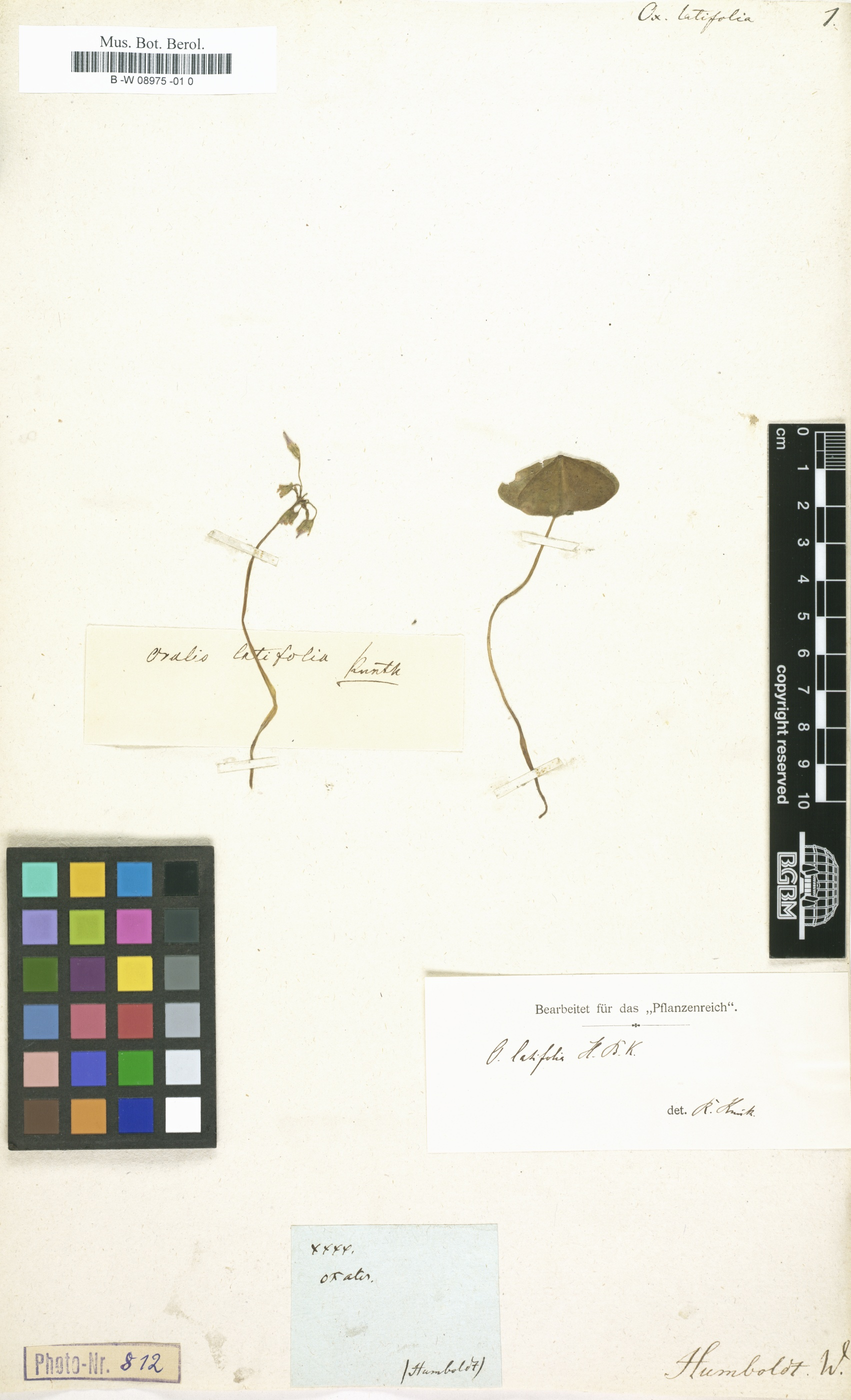 © Botanic Garden and Botanical Museum Berlin-Dahlem, Freie Universität Berlin<br>by Röpert, D. (Ed.) 2000- (continuously updated): Digital specimen images at the Herbarium Berolinense. - Published on the Internet http://ww2.bgbm.org/herbarium/ (Barcode: B -W 08975 -01 0 / ImageId: 291191) [accessed 28-Nov-11].<br>