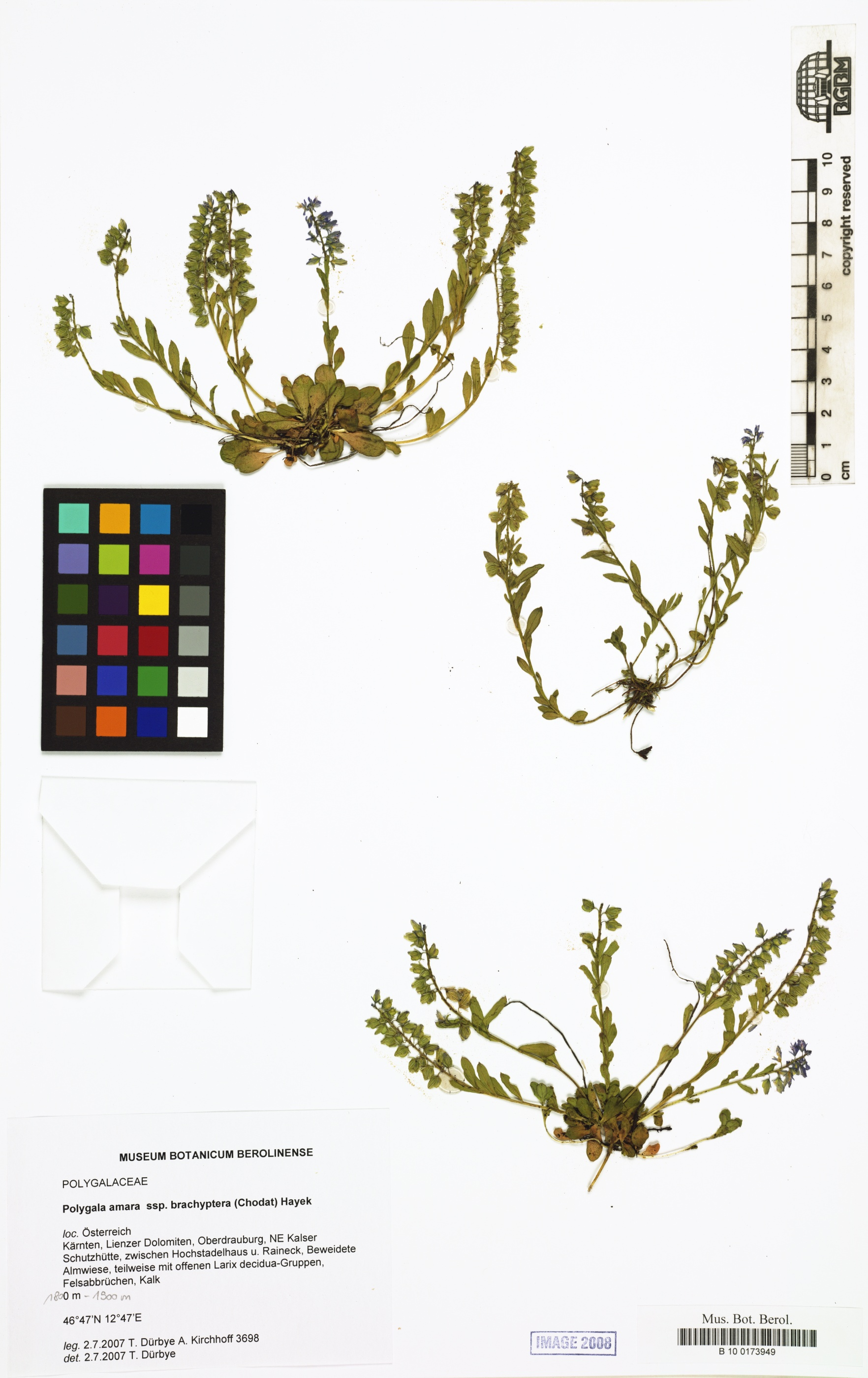 © Botanic Garden and Botanical Museum Berlin-Dahlem, Freie Universität Berlin<br>by Röpert, D. (Ed.) 2000- (continuously updated): Digital specimen images at the Herbarium Berolinense. - Published on the Internet http://ww2.bgbm.org/herbarium/ (Barcode: B 10 0173949 / ImageId: 291603) [accessed 29-Nov-11].<br>