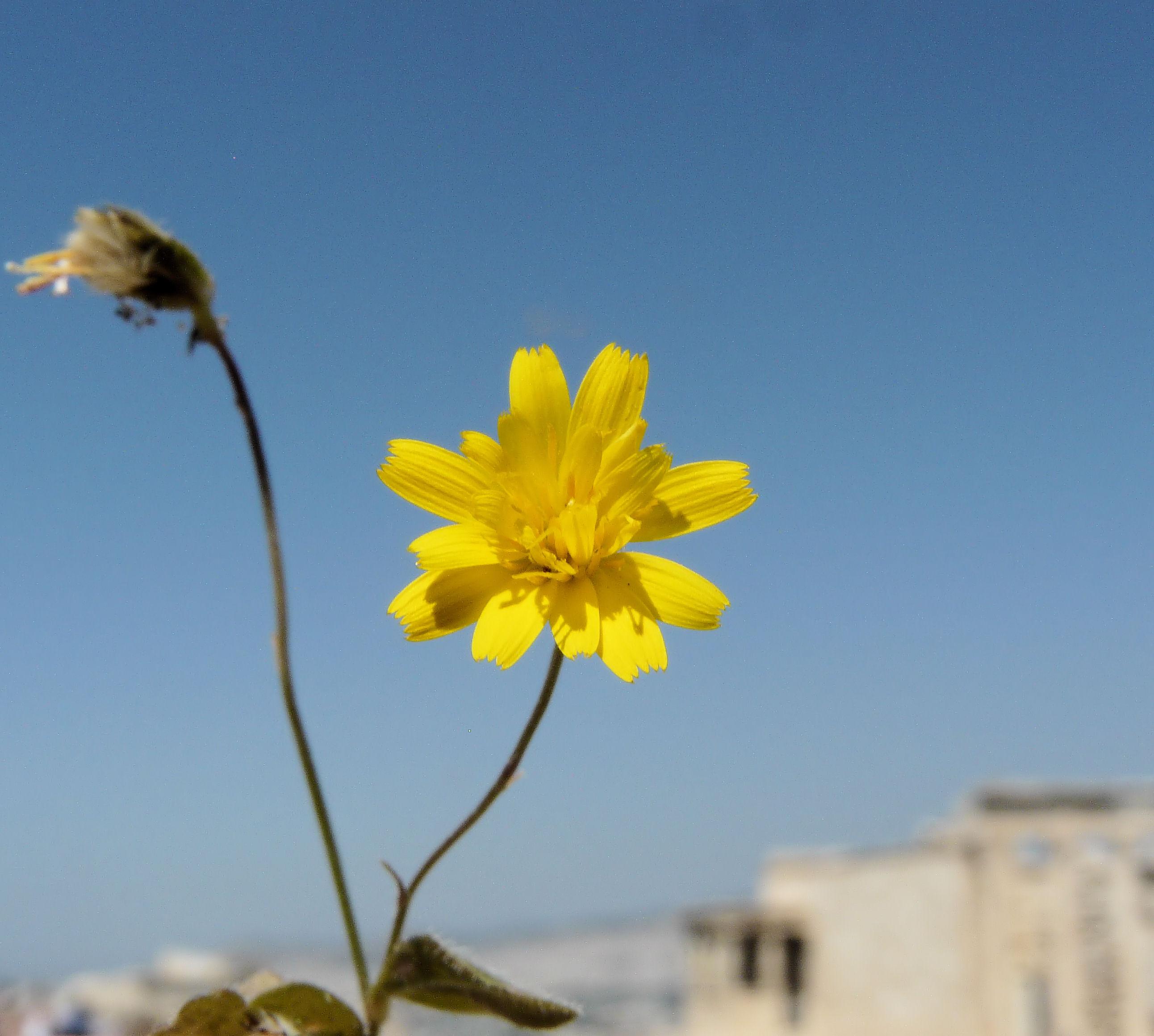 © Dipartimento di Scienze della Vita, Università degli Studi di Trieste<br>by Andrea Moro<br>Athens, Acropolis, near the Parthenon, Attica, Greece, 05/05/2012<br>Distributed under CC-BY-SA 4.0 license.