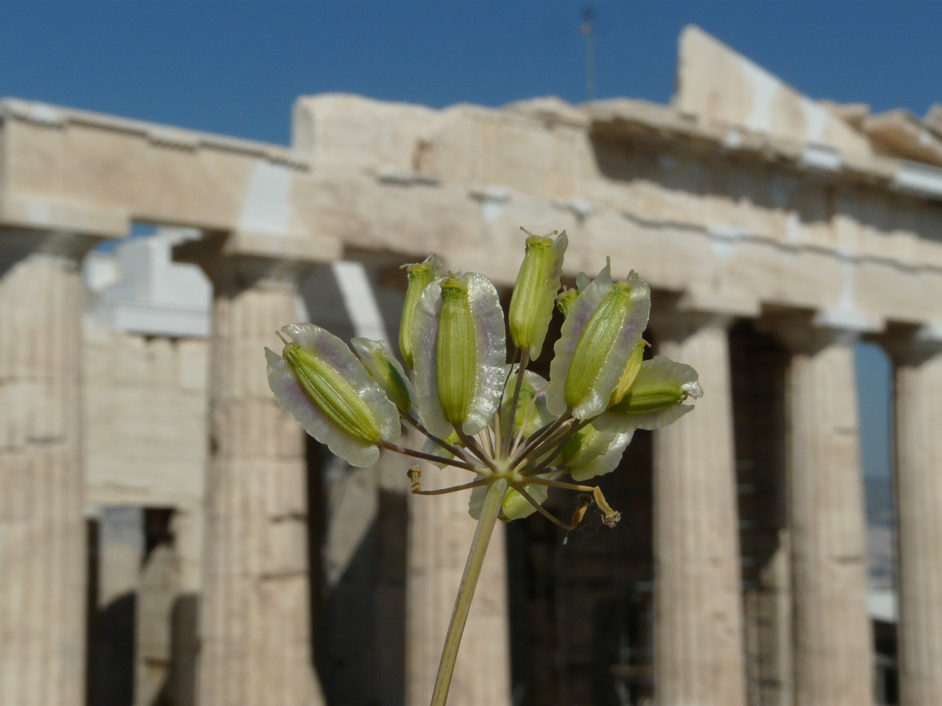 © Dipartimento di Scienze della Vita, Università degli Studi di Trieste<br>by Andrea Moro<br>Athens, Acropolis, Propylaea, Attica, Greece, 05/05/2012<br>Distributed under CC-BY-SA 4.0 license.