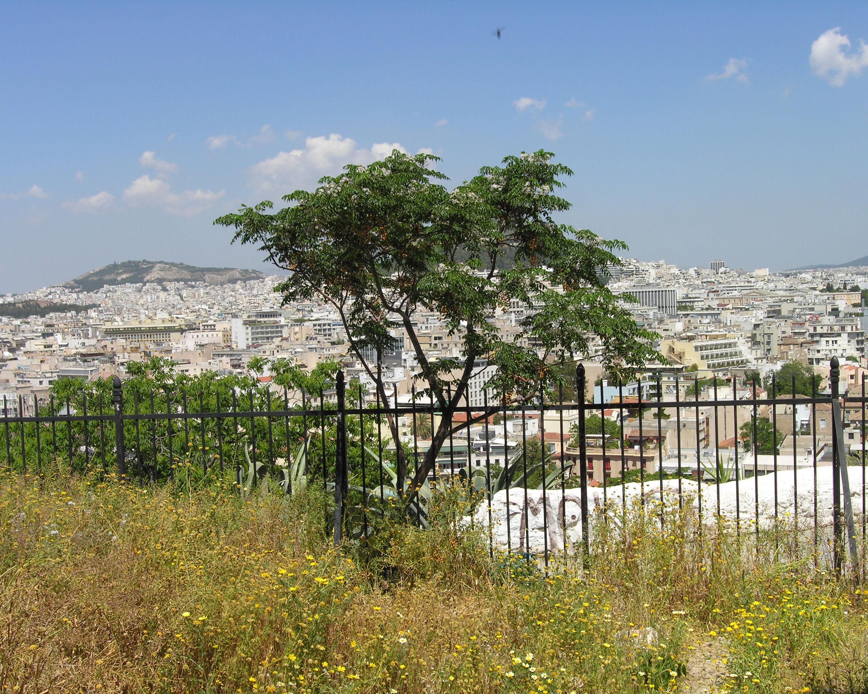 © Dipartimento di Scienze della Vita, Università degli Studi di Trieste<br>by Andrea Moro<br>Athens, eastern slope of Acropolis, Attica, Greece, 05/05/2012<br>Distributed under CC-BY-SA 4.0 license.