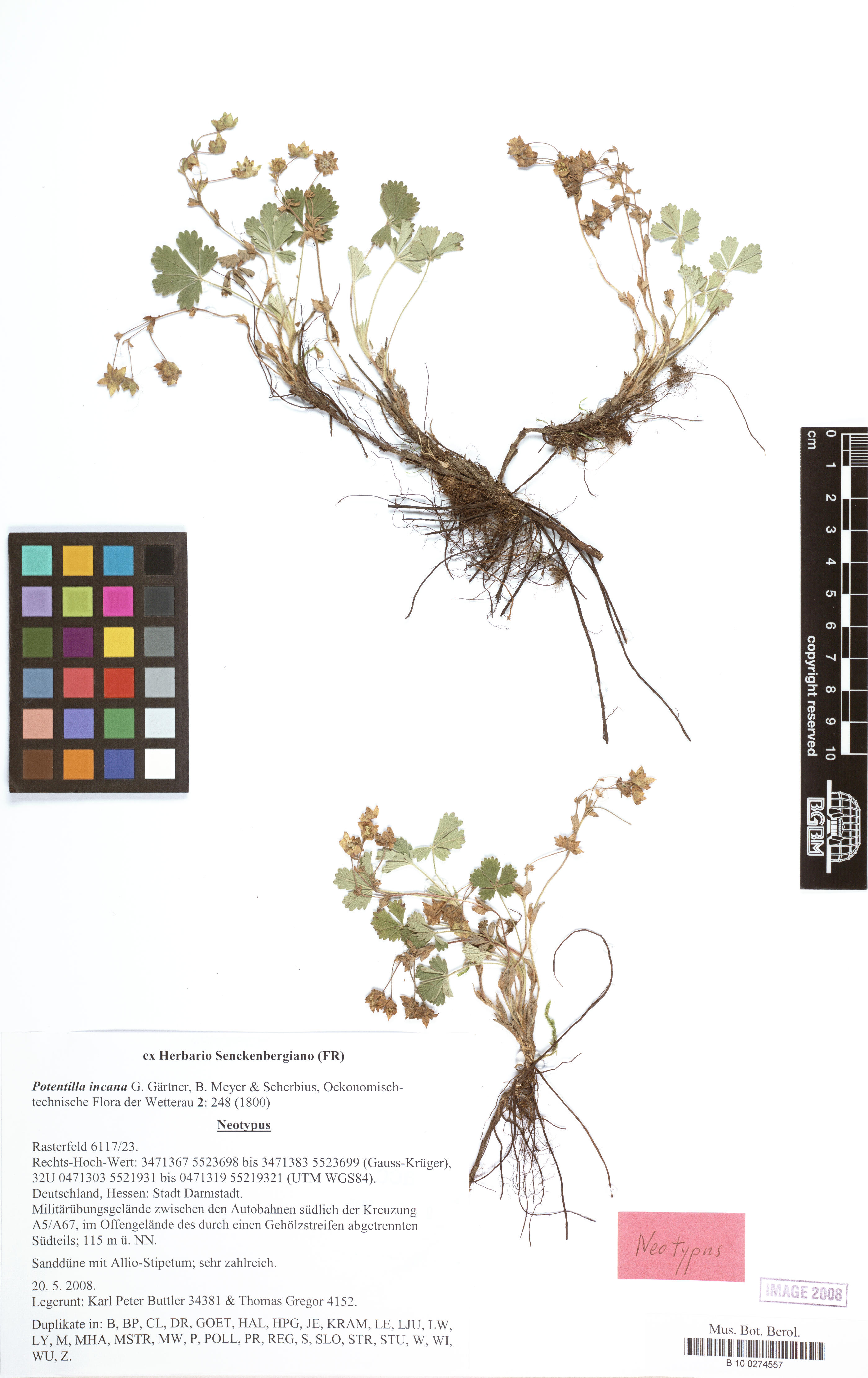 ©  Röpert, D. (Ed.) 2000- (continuously updated): Digital specimen images at the Herbarium Berolinense. - Published on the Internet http://ww2.bgbm.org/herbarium/ (Barcode: B 10 0274557 / ImageId: 284578) [accessed 24-Dec-12].<br>
