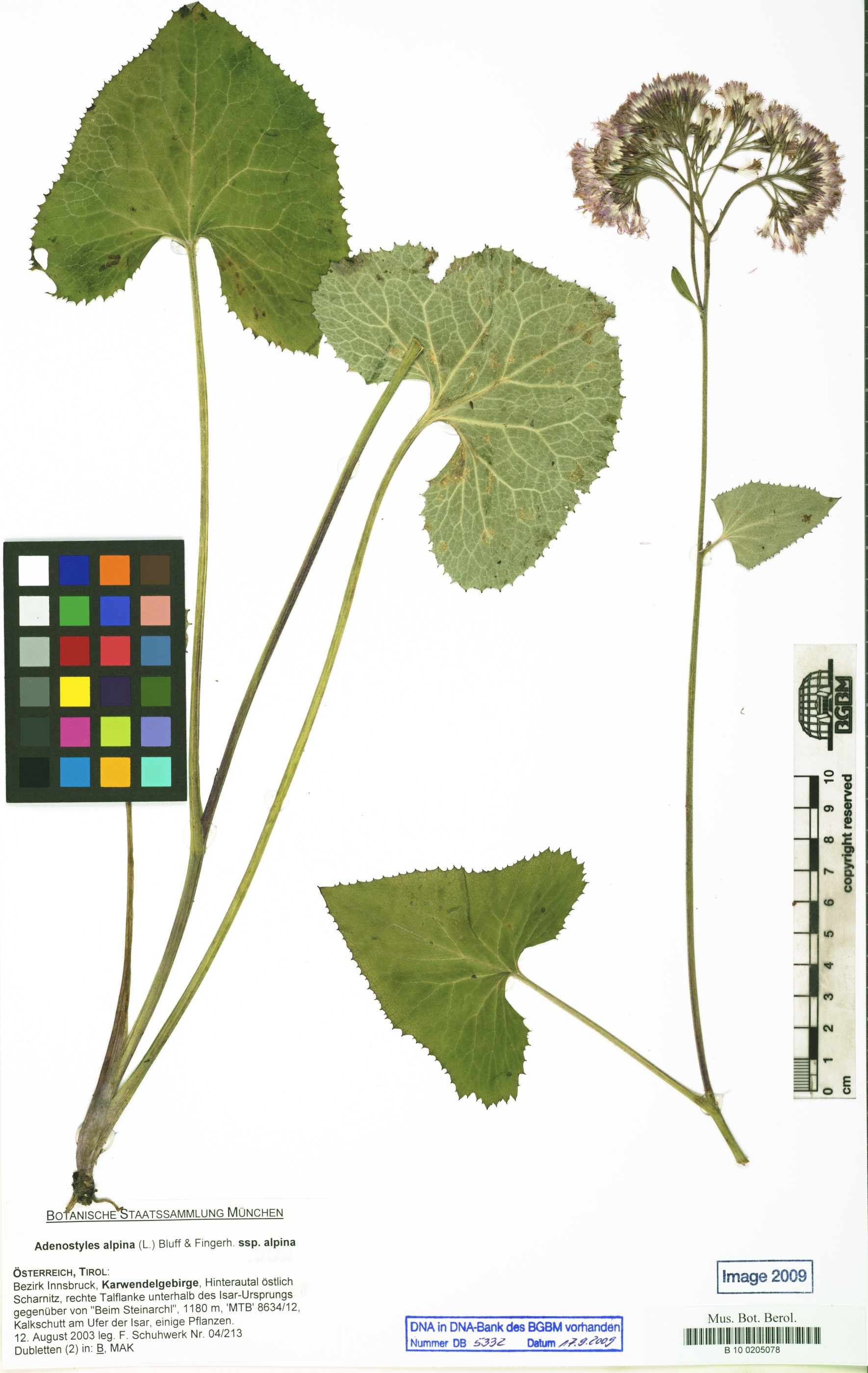 © Röpert, D. (Ed.) 2000- (continuously updated): Digital specimen images at the Herbarium Berolinense. - Published on the Internet http://ww2.bgbm.org/herbarium/ (Barcode: B 10 0205078 / ImageId: 297038) [accessed 25-Dec-12].<br>