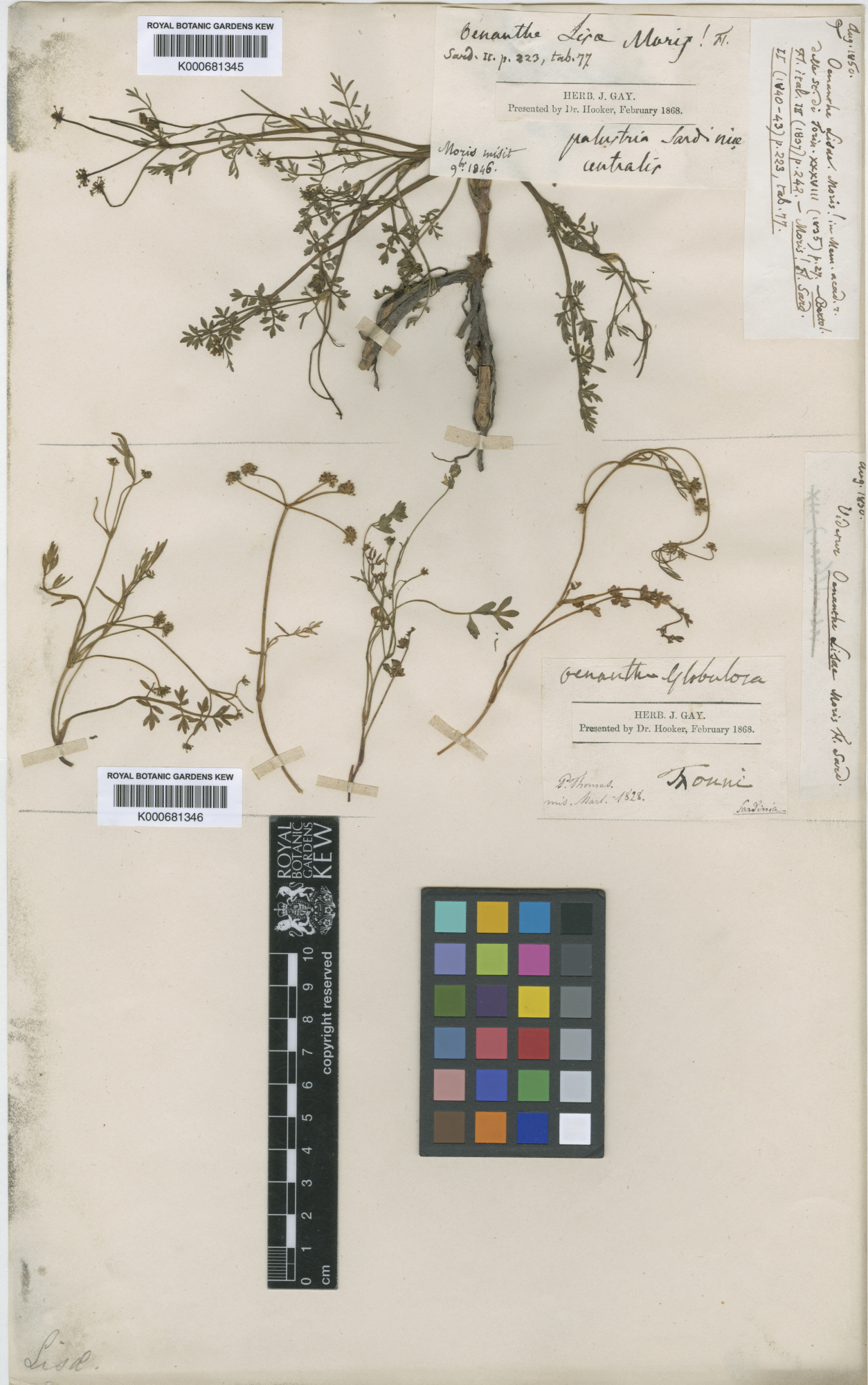 © The Board of Trustees of the Royal Botanic Gardens, Kew.<br>