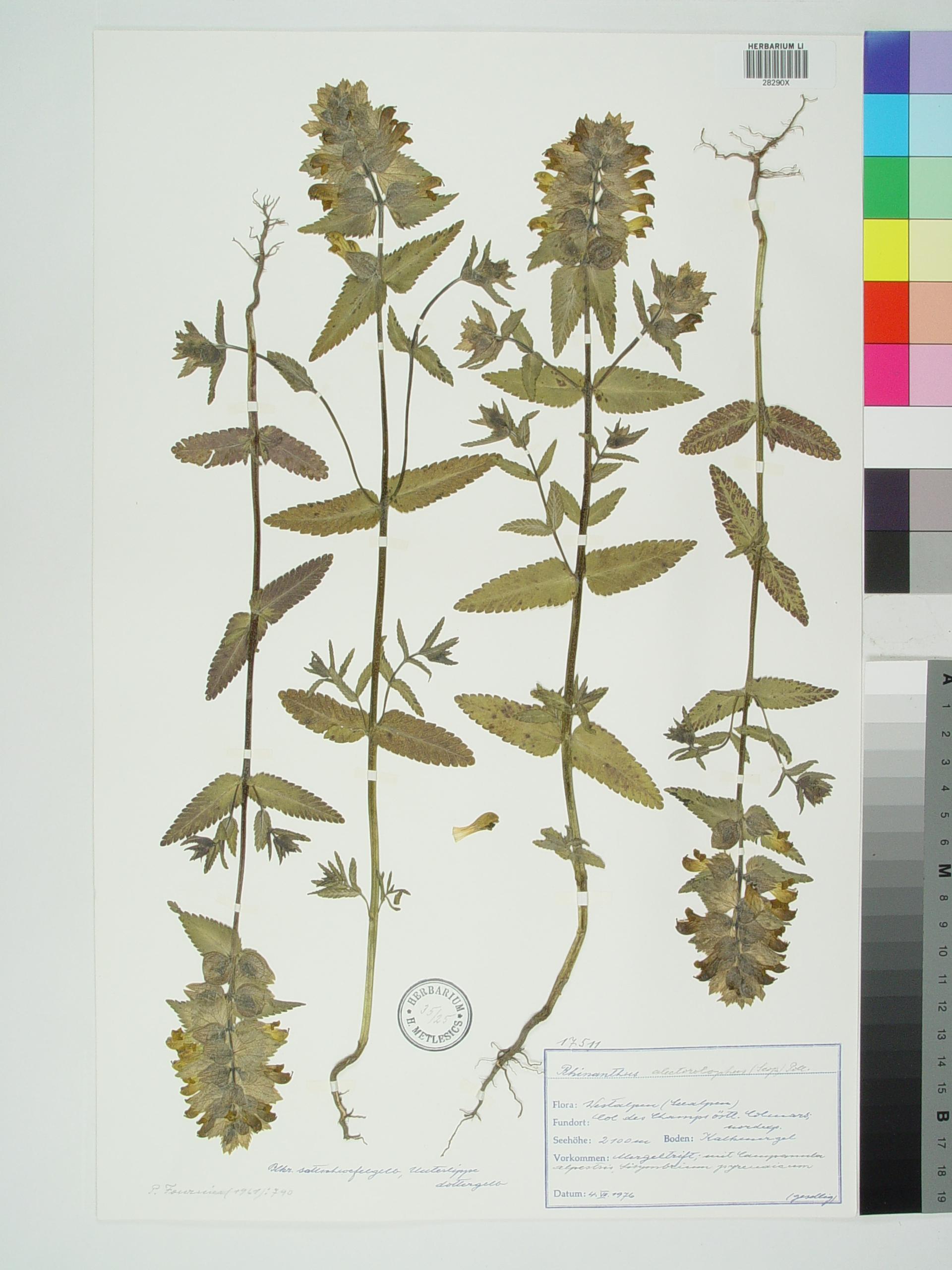 © Biologiezentrum der Oberoesterreichischen Landesmuseen  Rights: CC BY-SA  Identifier: BIOZOOELM - ZOBODAT - 100299079  Source: ZOBODAT (Zoological Botanical Database)<br>