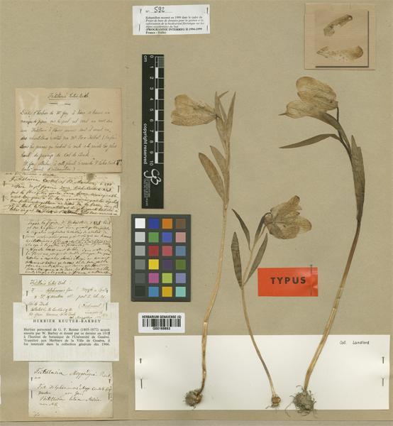 © Conservatoire et Jardin botaniques de la Ville de Genève (G), G00169893 - http://plants.jstor.org/specimen/g00169893 accessed jan 25.2013<br>