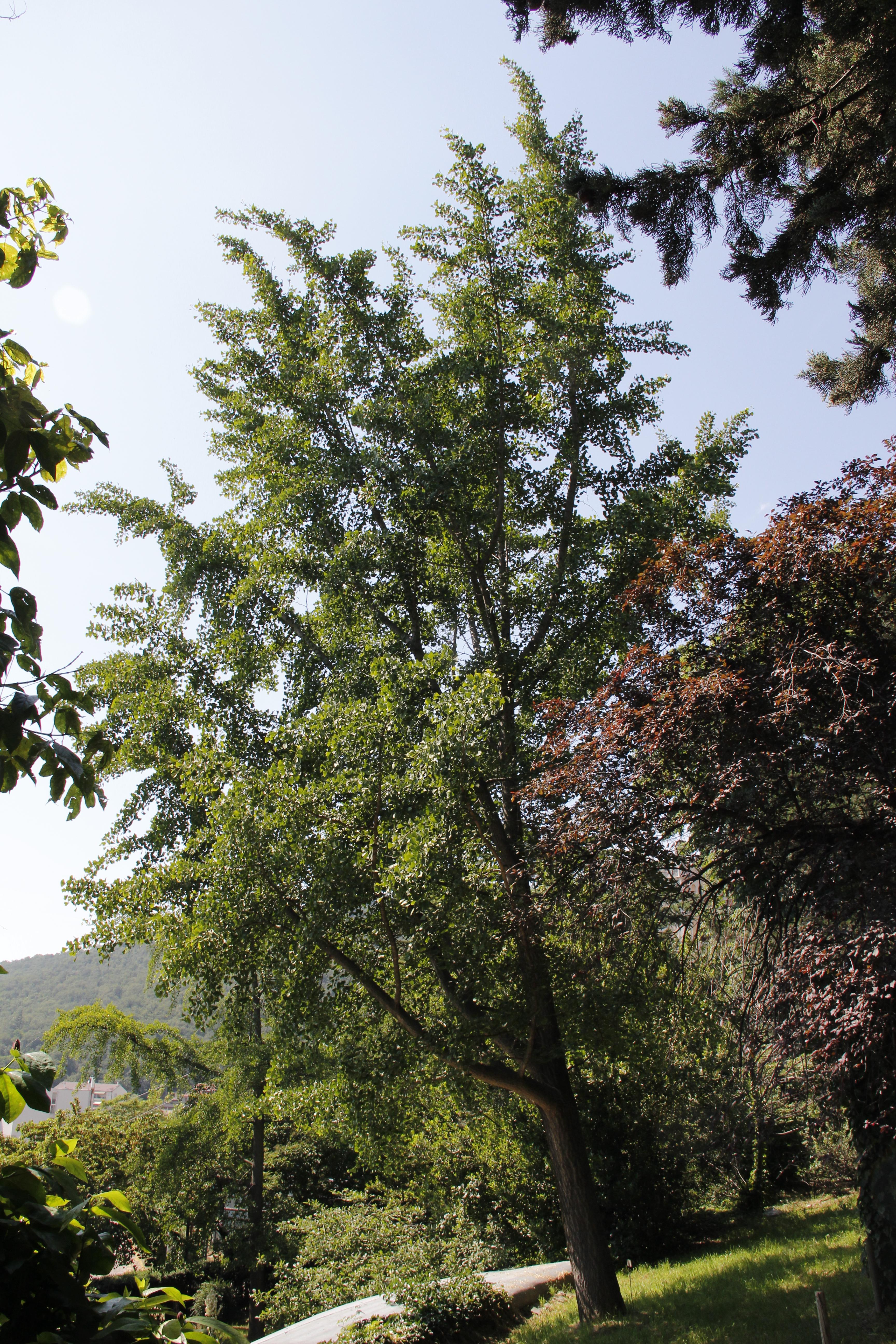 © Dipartimento di Scienze della Vita, Università degli Studi di Trieste<br>by Andrea Moro<br>Comune di Trieste, Campus Universitario, TS, Friuli Venezia Giulia, Italia, 14/06/2013<br>Distributed under CC-BY-SA 4.0 license.