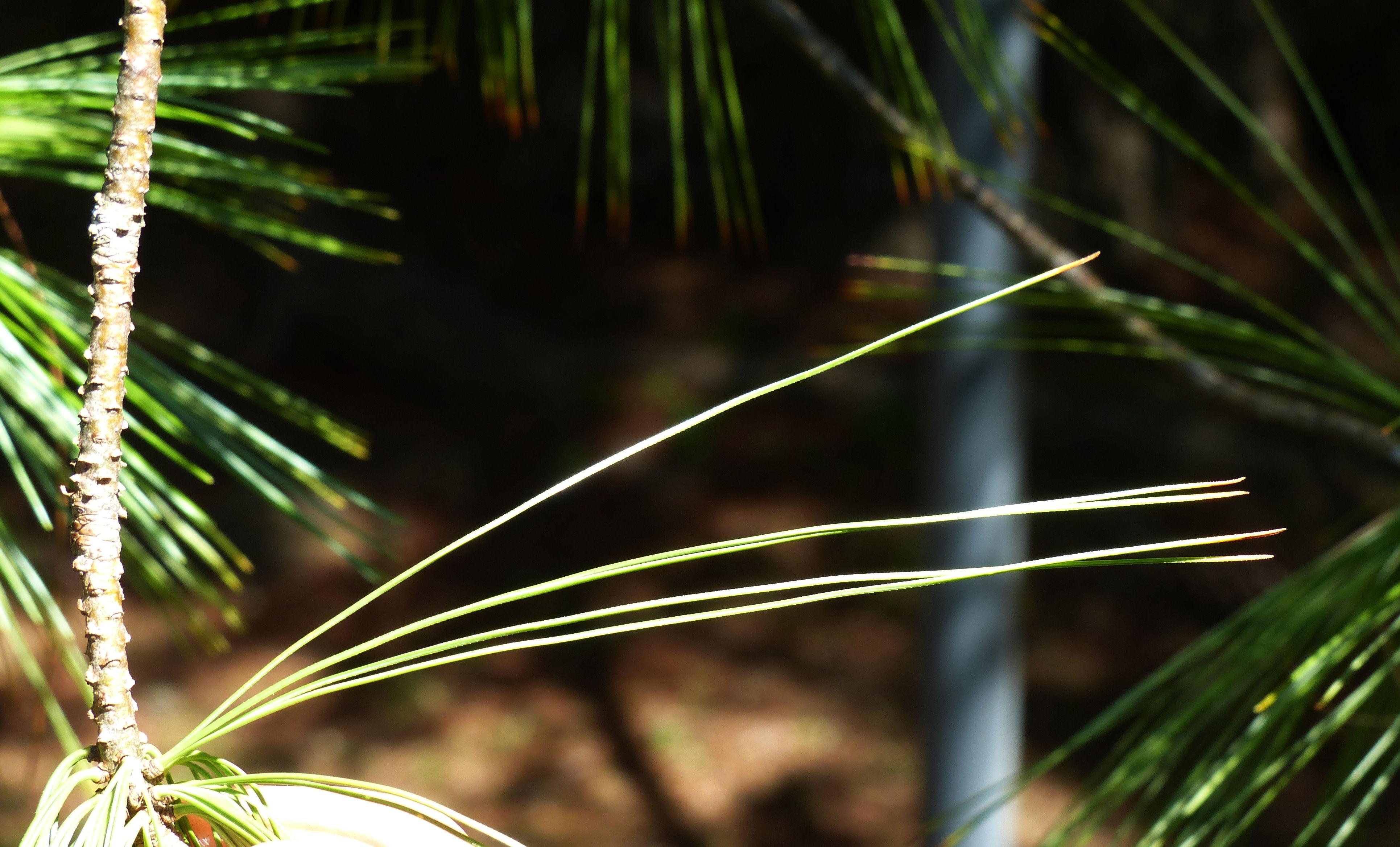 © Dipartimento di Scienze della Vita, Università degli Studi di Trieste<br>by Andrea Moro<br>Lucca, Orto Botanico nel Parco delle Mura, LU, Toscana, Italia, 29/08/2013<br>Distributed under CC-BY-SA 4.0 license.