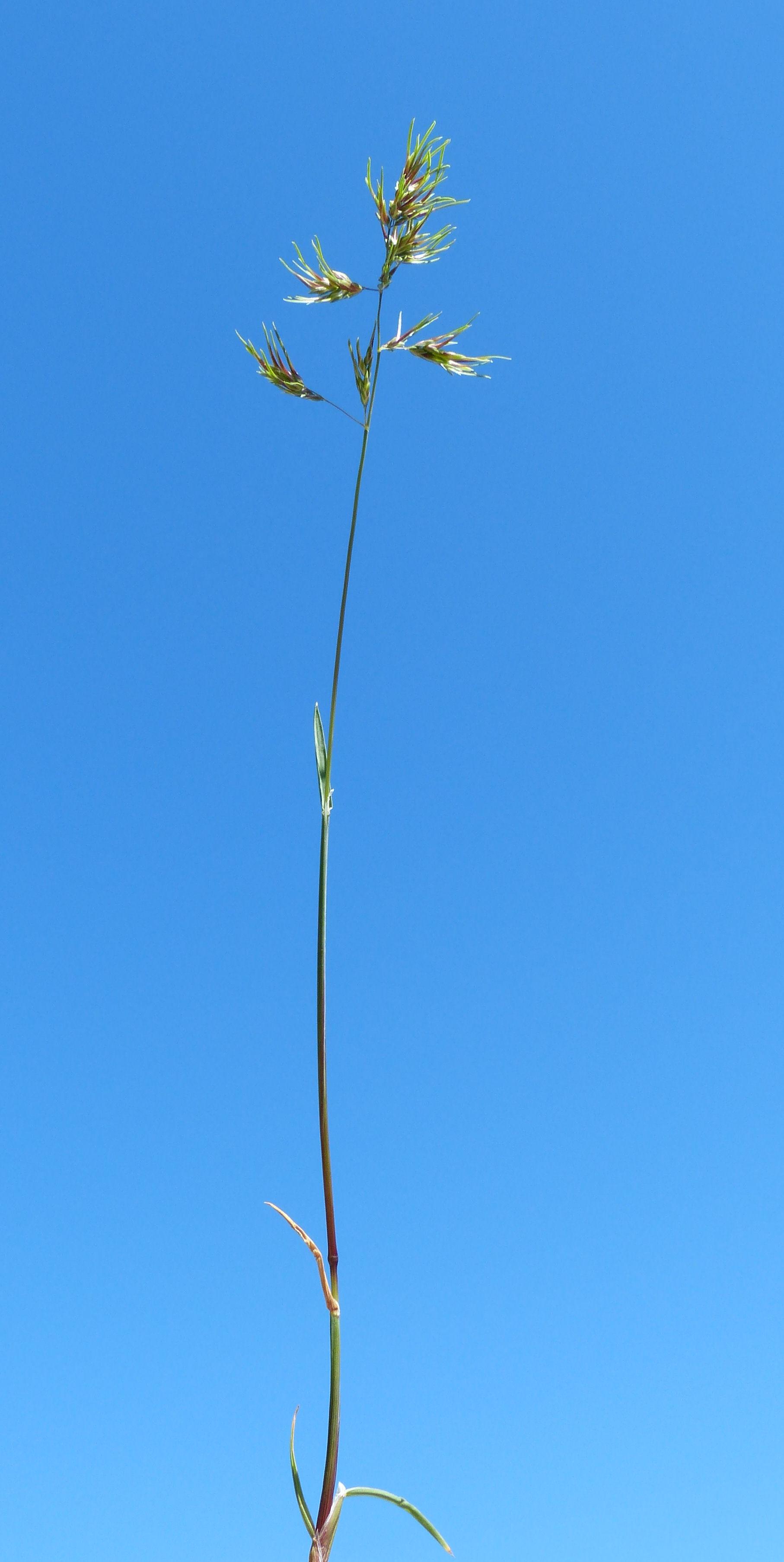 © Dipartimento di Scienze della Vita, Università degli Studi di Trieste<br>by Andrea Moro<br>Comune di Trieste, Monte Valerio, TS, Friuli Venezia Giulia, Italia, 24/04/2013<br>Distributed under CC-BY-SA 4.0 license.