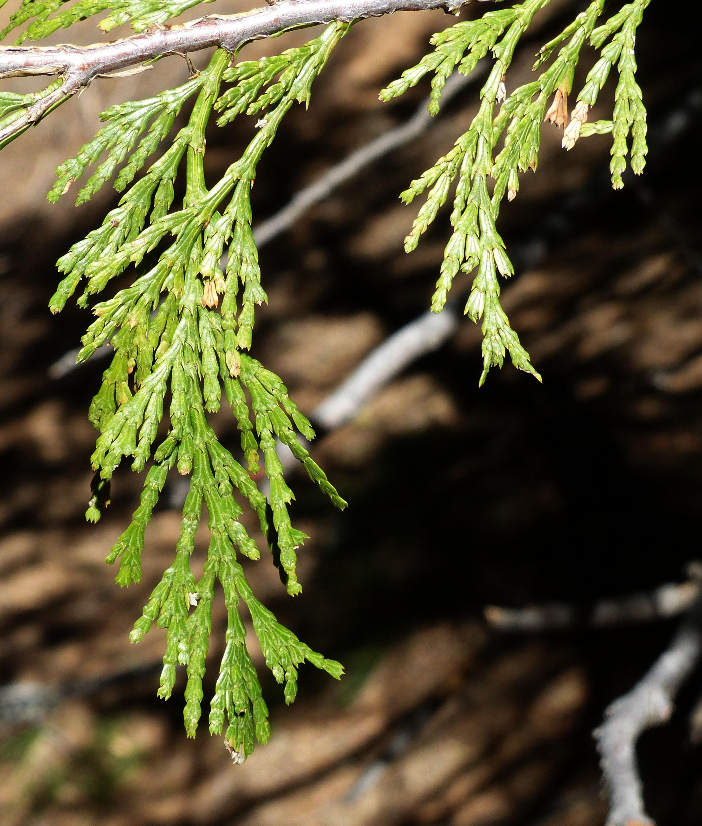 © Dipartimento di Scienze della Vita, Università di Trieste<br>by Andrea Moro<br>Yosemite National Park, California, U.S.A., 08/11/2014<br>Distributed under CC-BY-SA 4.0 license.