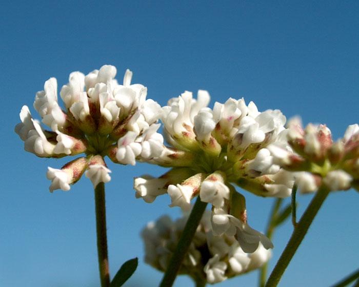 &copy; http://www.giorgioventurini.net/fiori/fiori_insieme.html<br>by Giorgio Venturini<br>