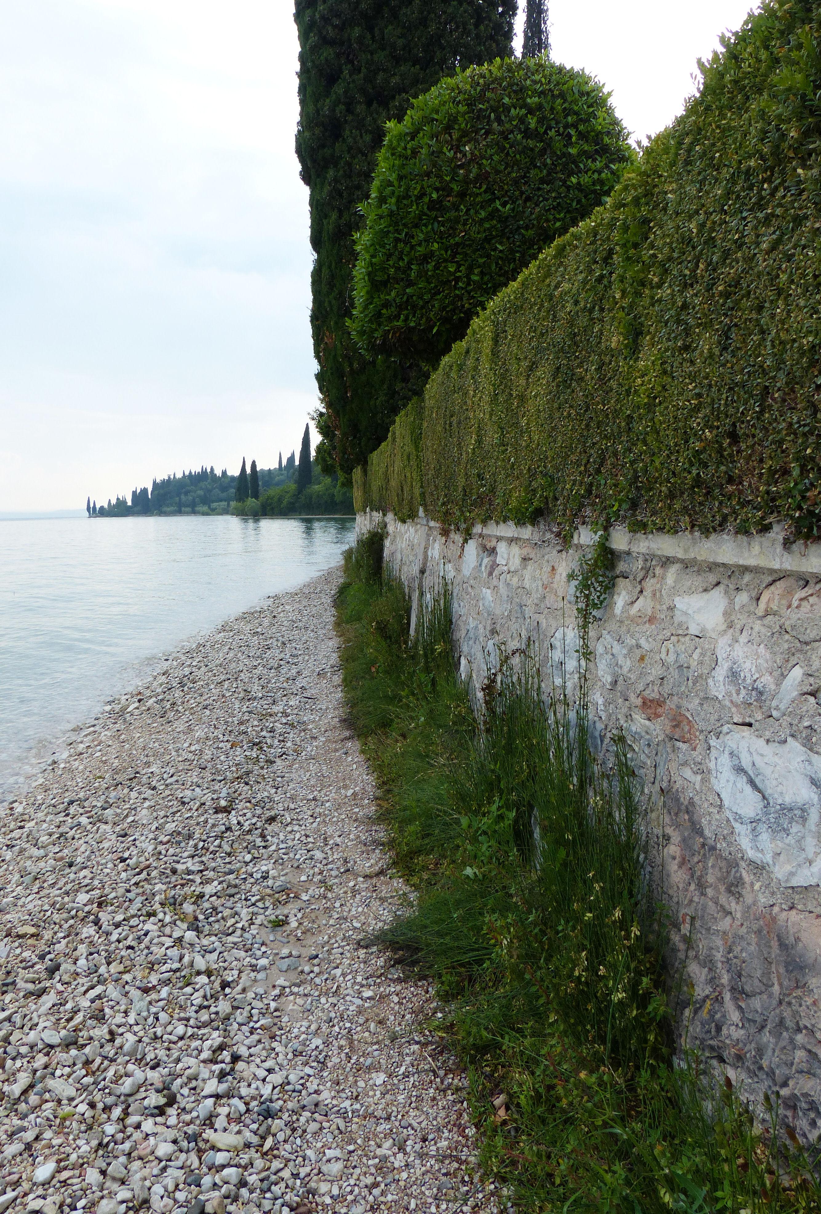 © Dipartimento di Scienze della Vita, Università di Trieste<br>by Andrea Moro<br>Comune di Garda, lungo la passeggiata per Punta San Vigilio, VR, Veneto, Italia, 03/06/2016<br>Distributed under CC-BY-SA 4.0 license.