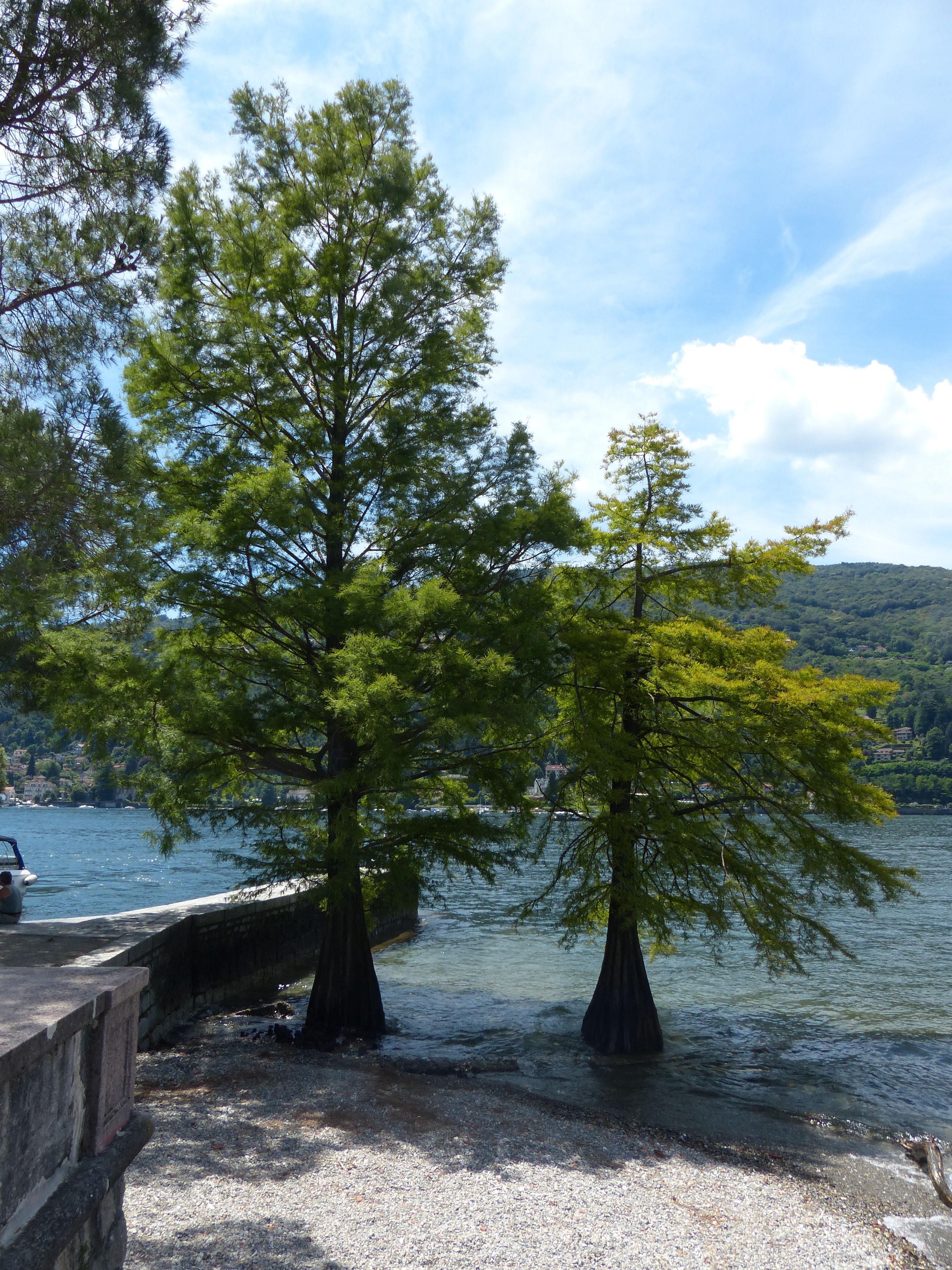 © Dipartimento di Scienze della Vita, Università di Trieste<br>by Andrea Moro<br>Comune di Stresa, Isola Bella, VB, Piemonte, Italia, 18/07/2012<br>Distributed under CC-BY-SA 4.0 license.