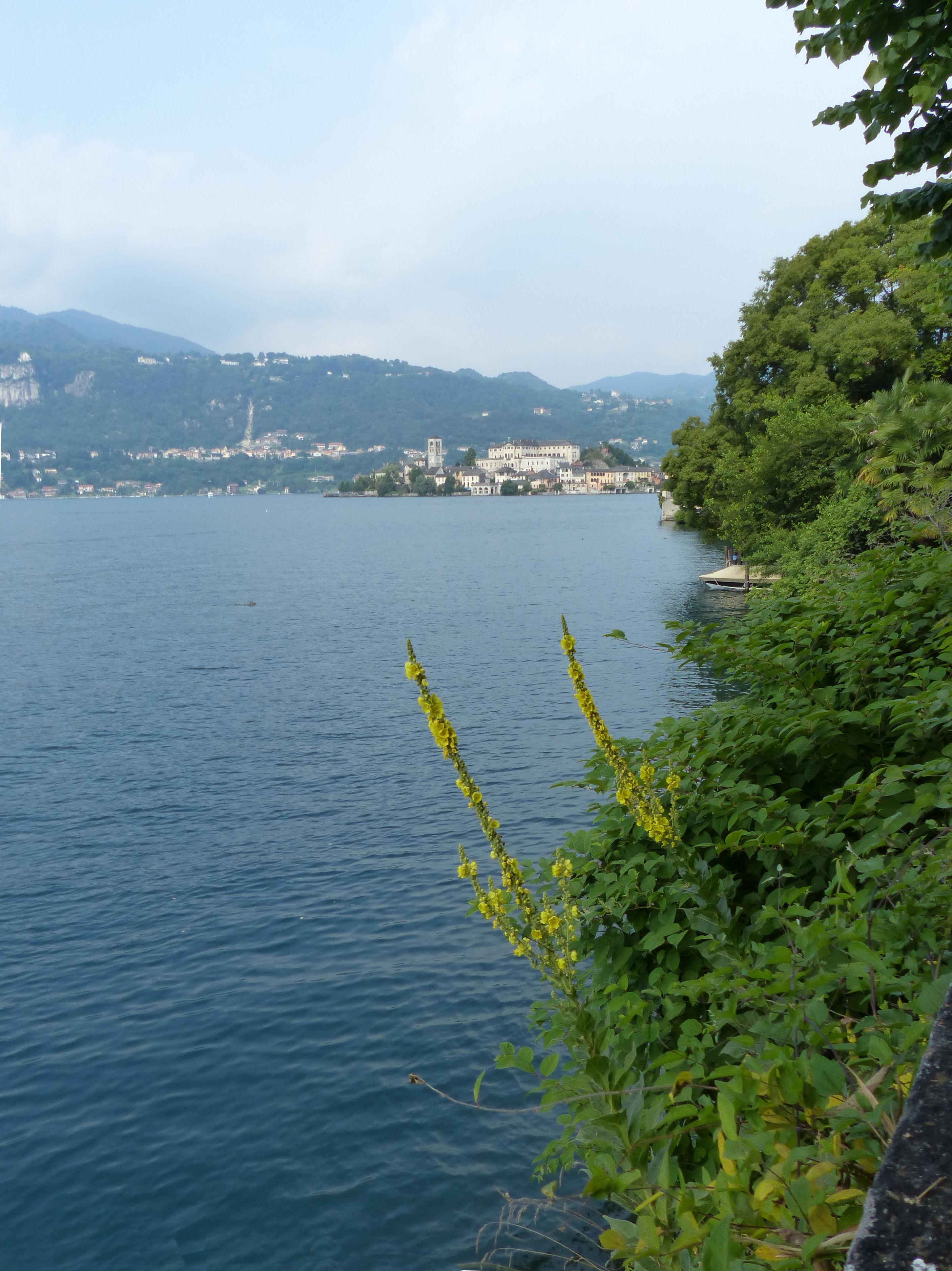 © Dipartimento di Scienze della Vita, Università di Trieste<br>by Andrea Moro<br>Comune di Orta San Giulio, passeggiata lungo il lago, NO, Piemonte, Italia, 23/07/2012<br>Distributed under CC-BY-SA 4.0 license.