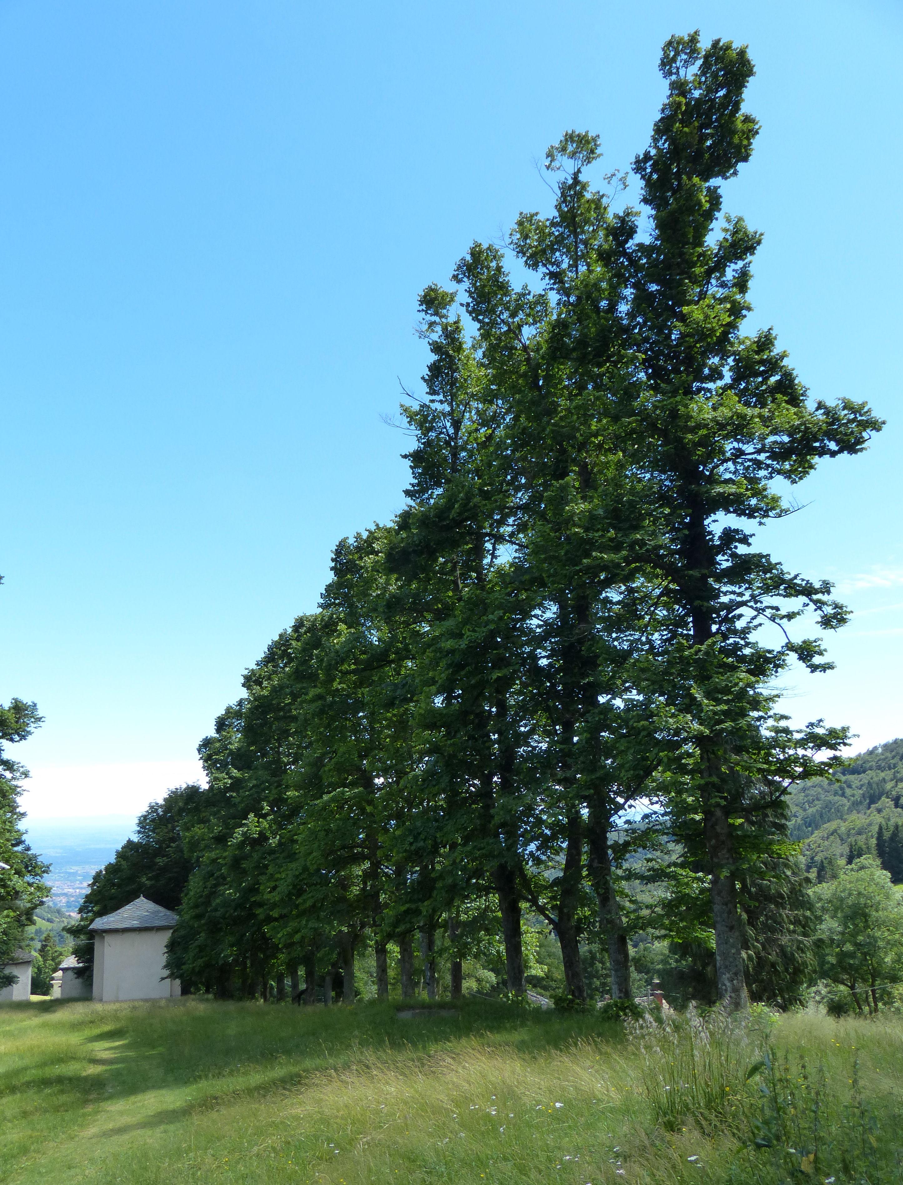 © Dipartimento di Scienze della Vita, Università di Trieste<br>by Andrea Moro<br>Comune di Biella, Sacro Monte di Oropa, BI, Piemonte, Italia, 26/07/2016<br>Distributed under CC-BY-SA 4.0 license.