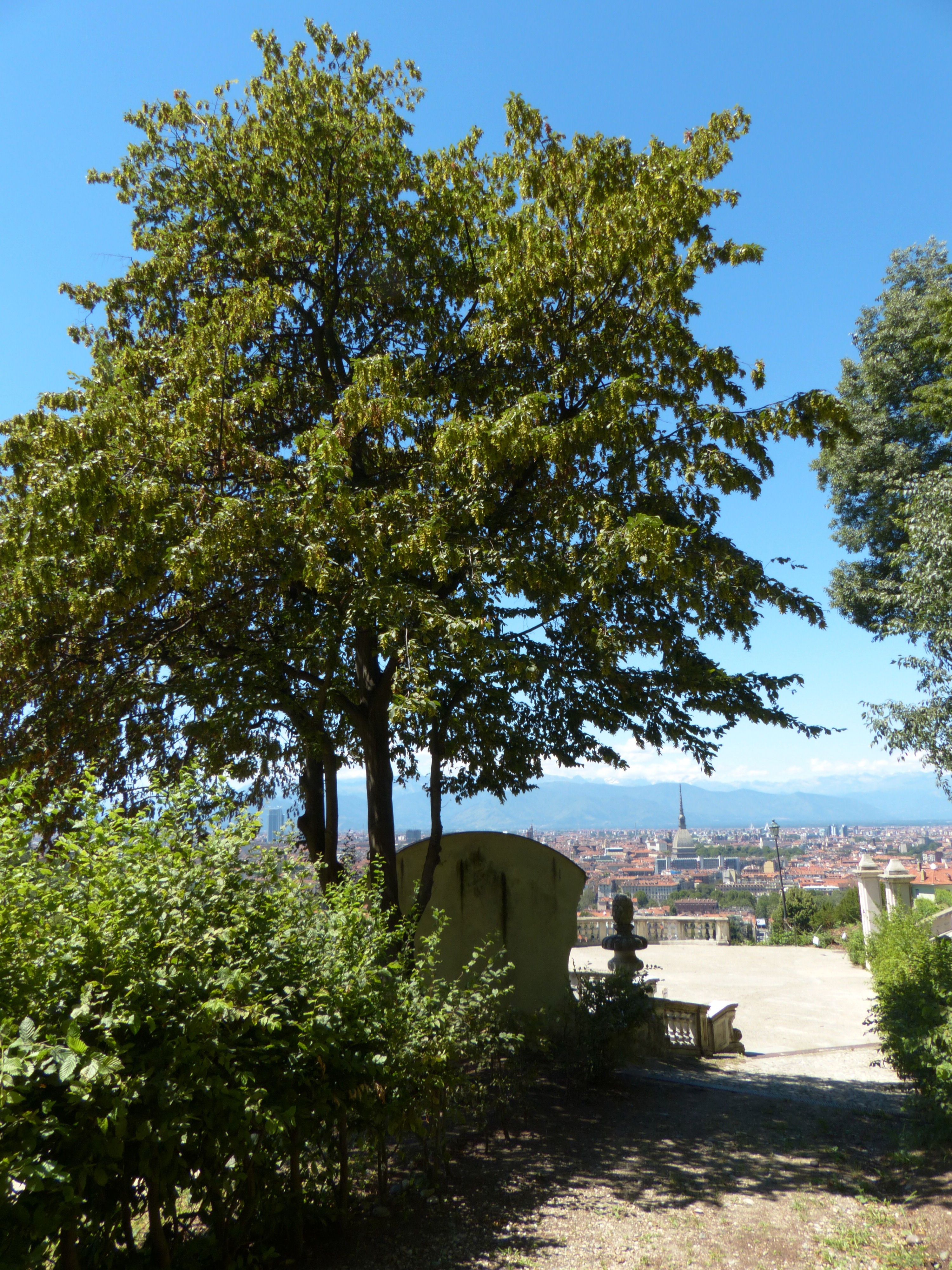 © Dipartimento di Scienze della Vita, Università di Trieste<br>by Andrea Moro<br>Comune di Torino, Villa della Regina, To, Piemonte, Italia, 28/07/2016<br>Distributed under CC-BY-SA 4.0 license.