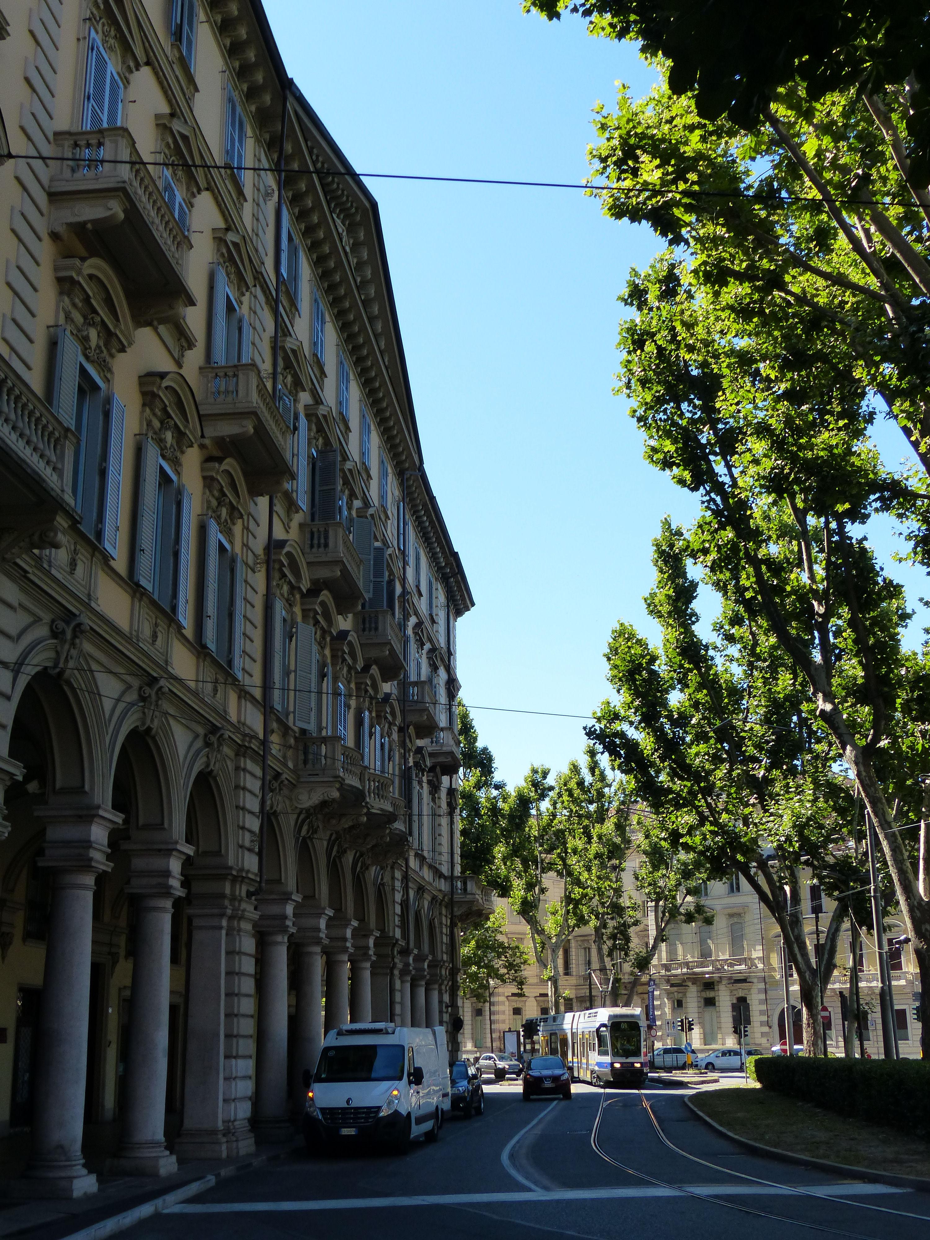 © Dipartimento di Scienze della Vita, Università di Trieste<br>by Andrea Moro<br>Comune di Torino, viali cittadini, TO, Piemonte, Italia, 26/07/2016<br>Distributed under CC-BY-SA 4.0 license.