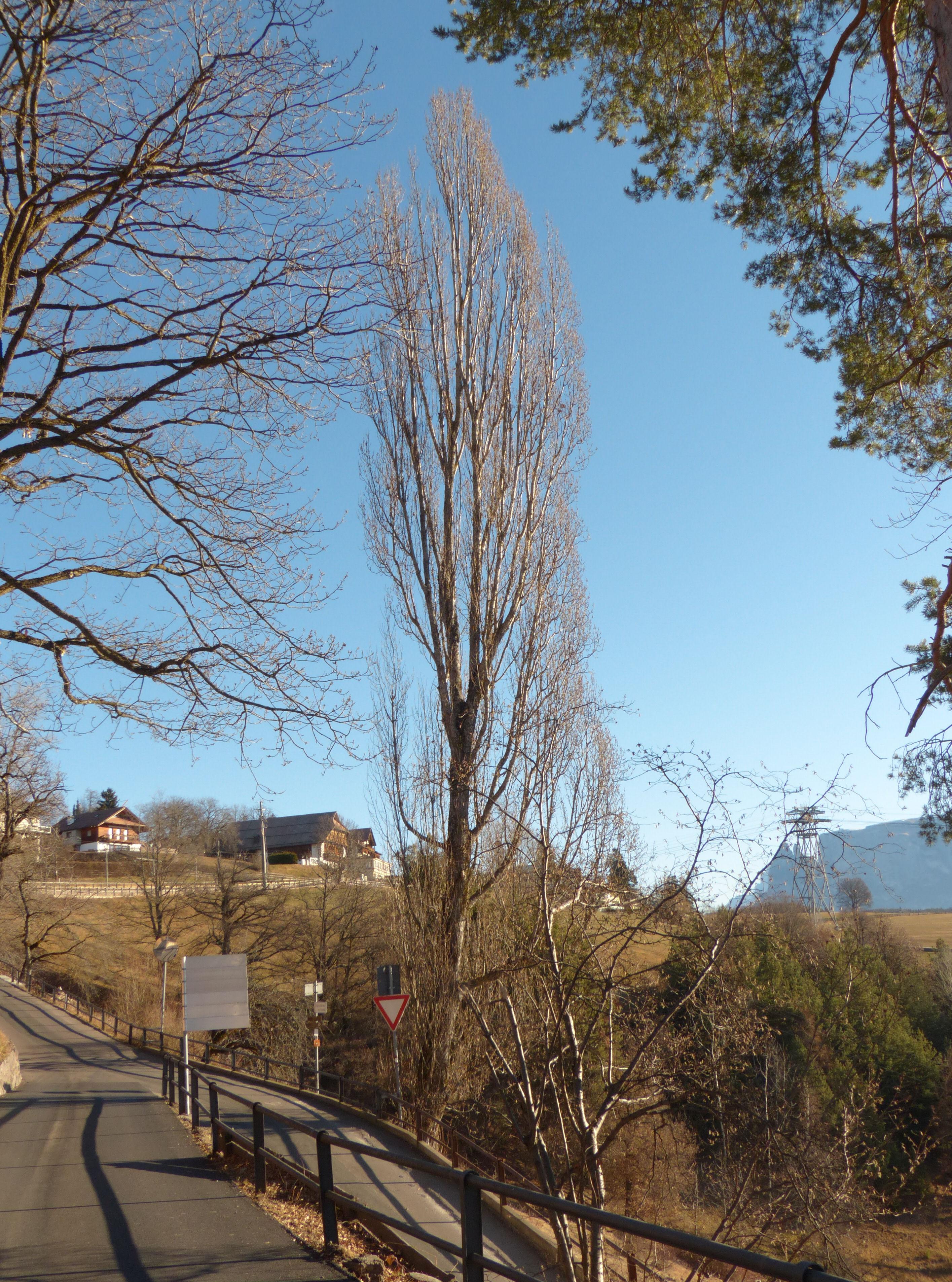 © Dipartimento di Scienze della Vita, Università di Trieste<br>by Andrea Moro<br>Comune di Bolzano / Bozen, Renon / Ritten, L'Assunta / Maria Himmelfahrt, BZ, Trentino-Alto Adige/Südtirol, Italia, 30/12/2016<br>Distributed under CC-BY-SA 4.0 license.
